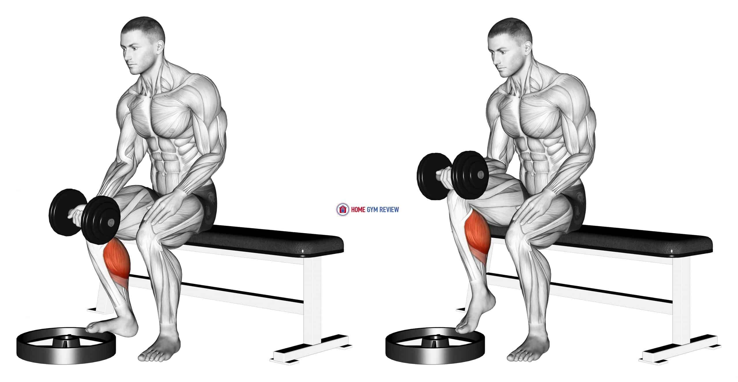 Dumbbell Seated One Leg Calf Raise - Palm up