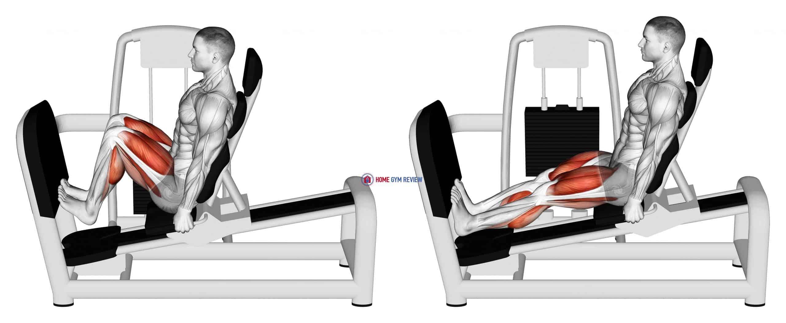 Lever Seated Squat Calf Raise on Leg Press Machine