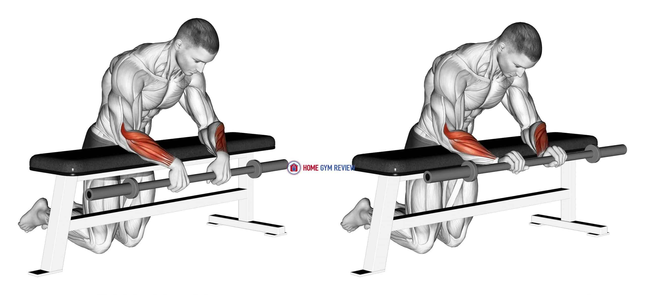 Barbell Palms Down Wrist Curl Over A Bench