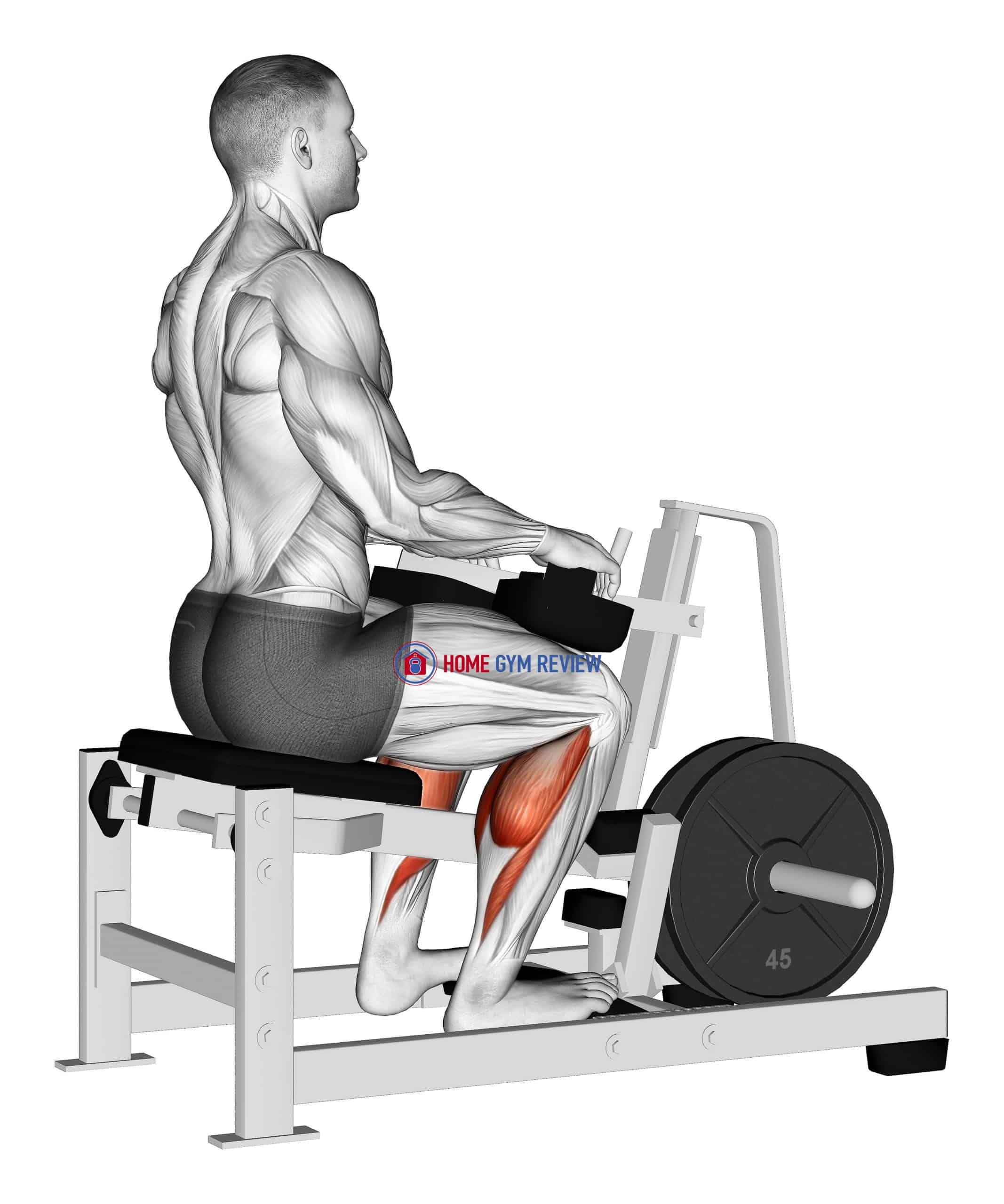 Lever Calf Stretch (plate loaded) Isometric