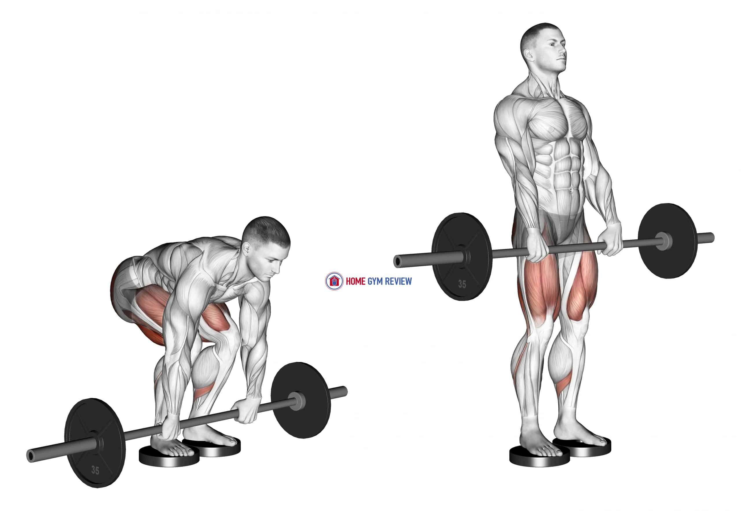 Barbell Romanian Deadlift From Deficit