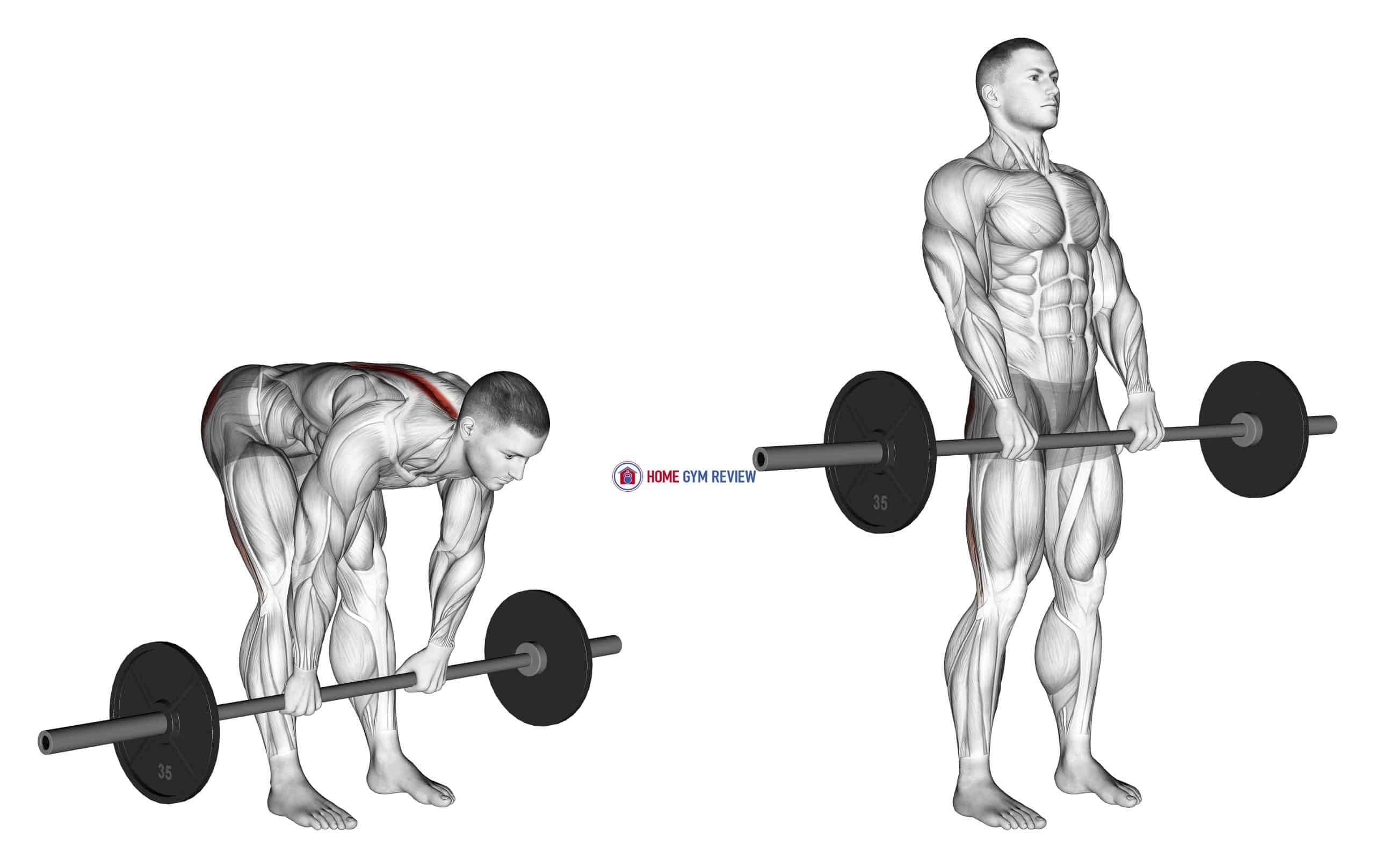 Barbell Stiff Legged Deadlift