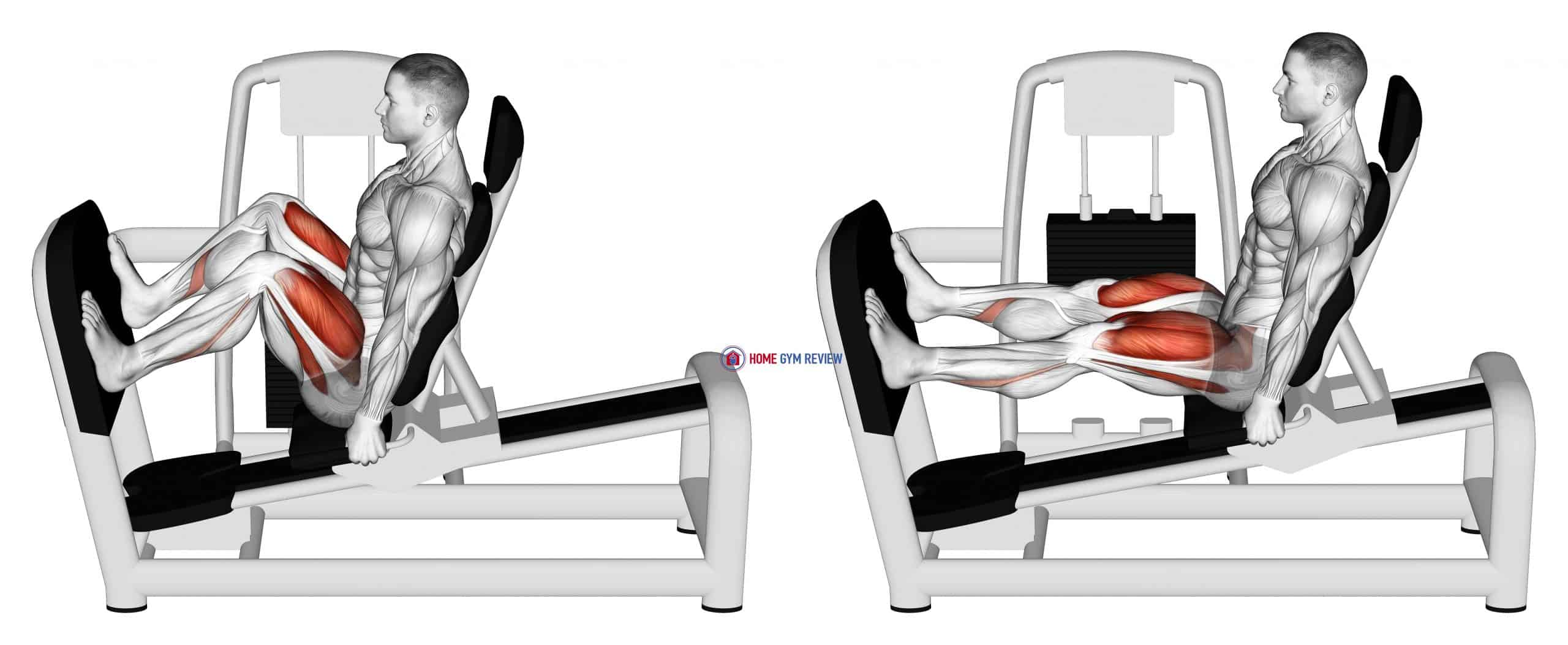 Lever Seated Wide Squat