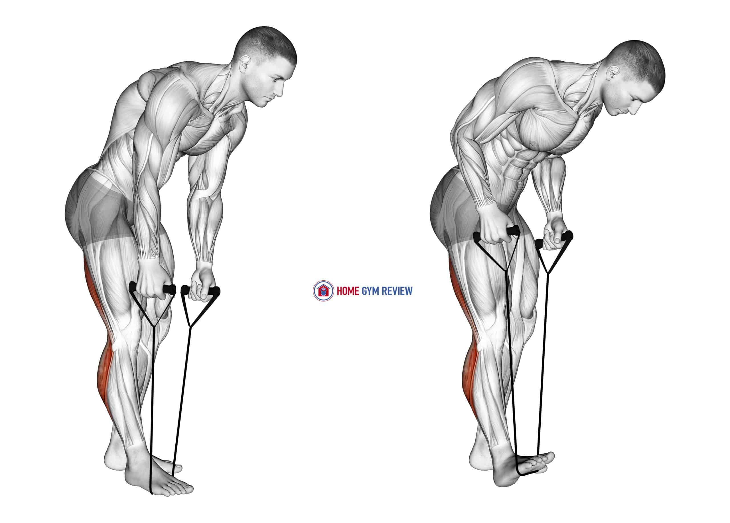 Standing Hamstring and Calf Stretch with Strap