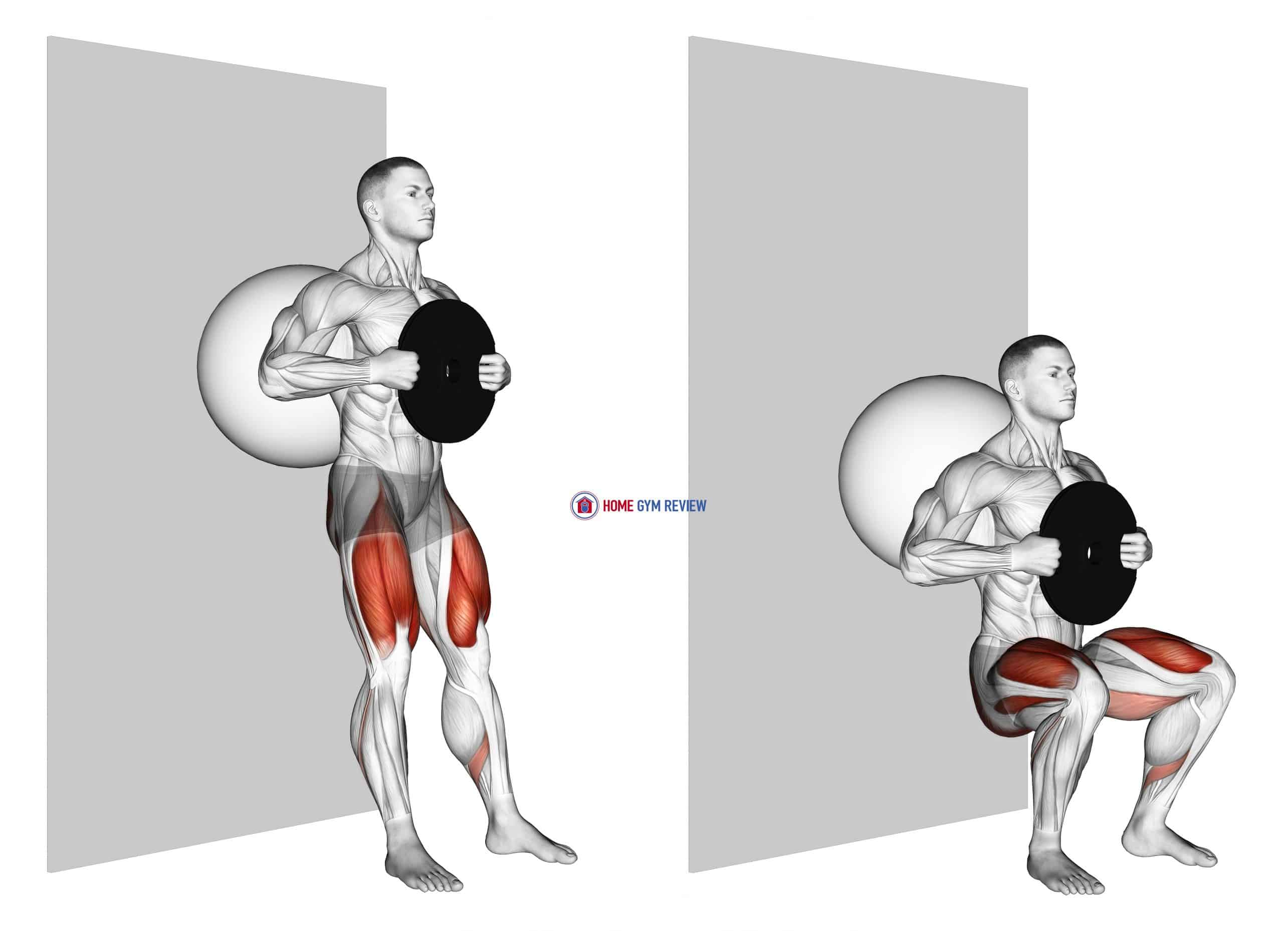 Weighted Exercise Ball Wall Squat