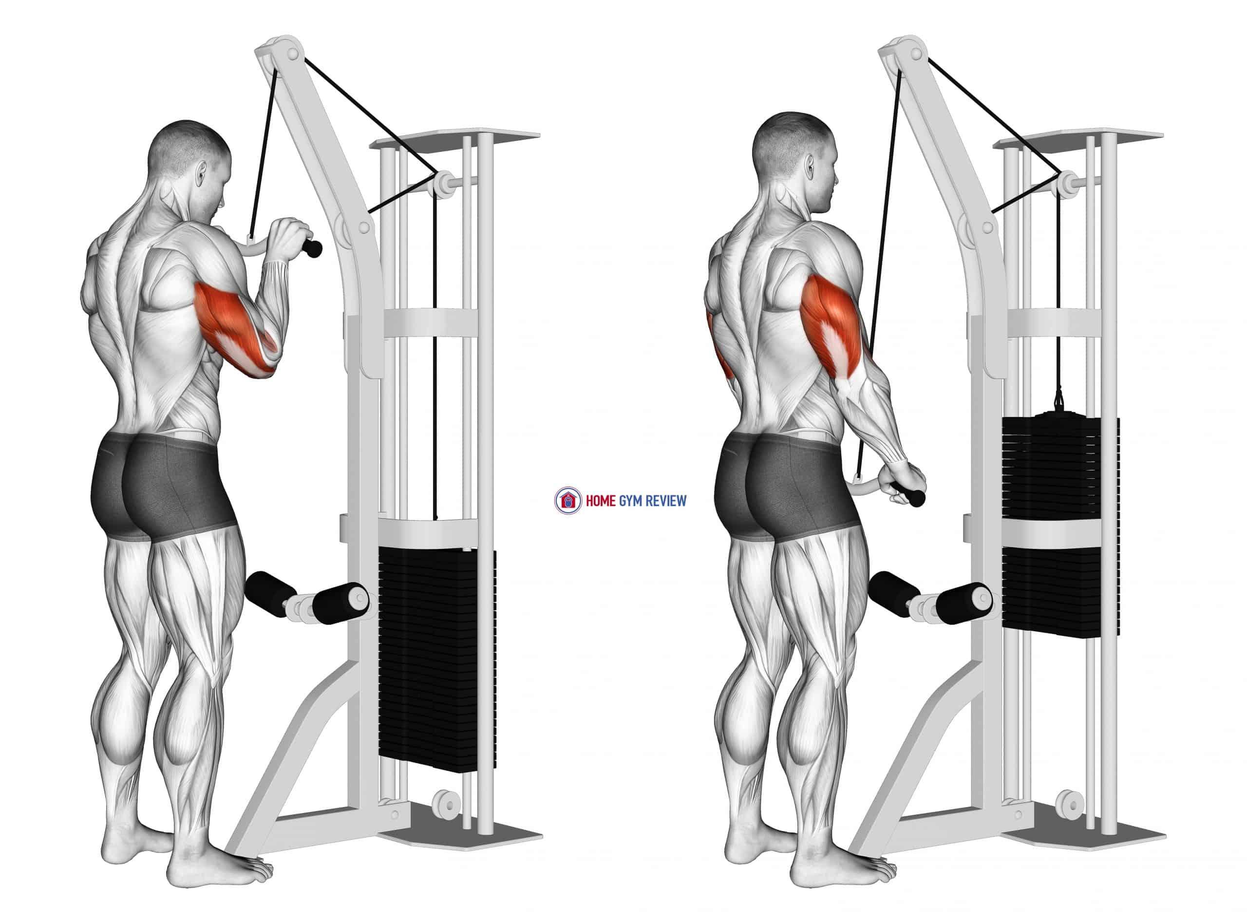 Cable Triceps Pushdown (SZ-bar)
