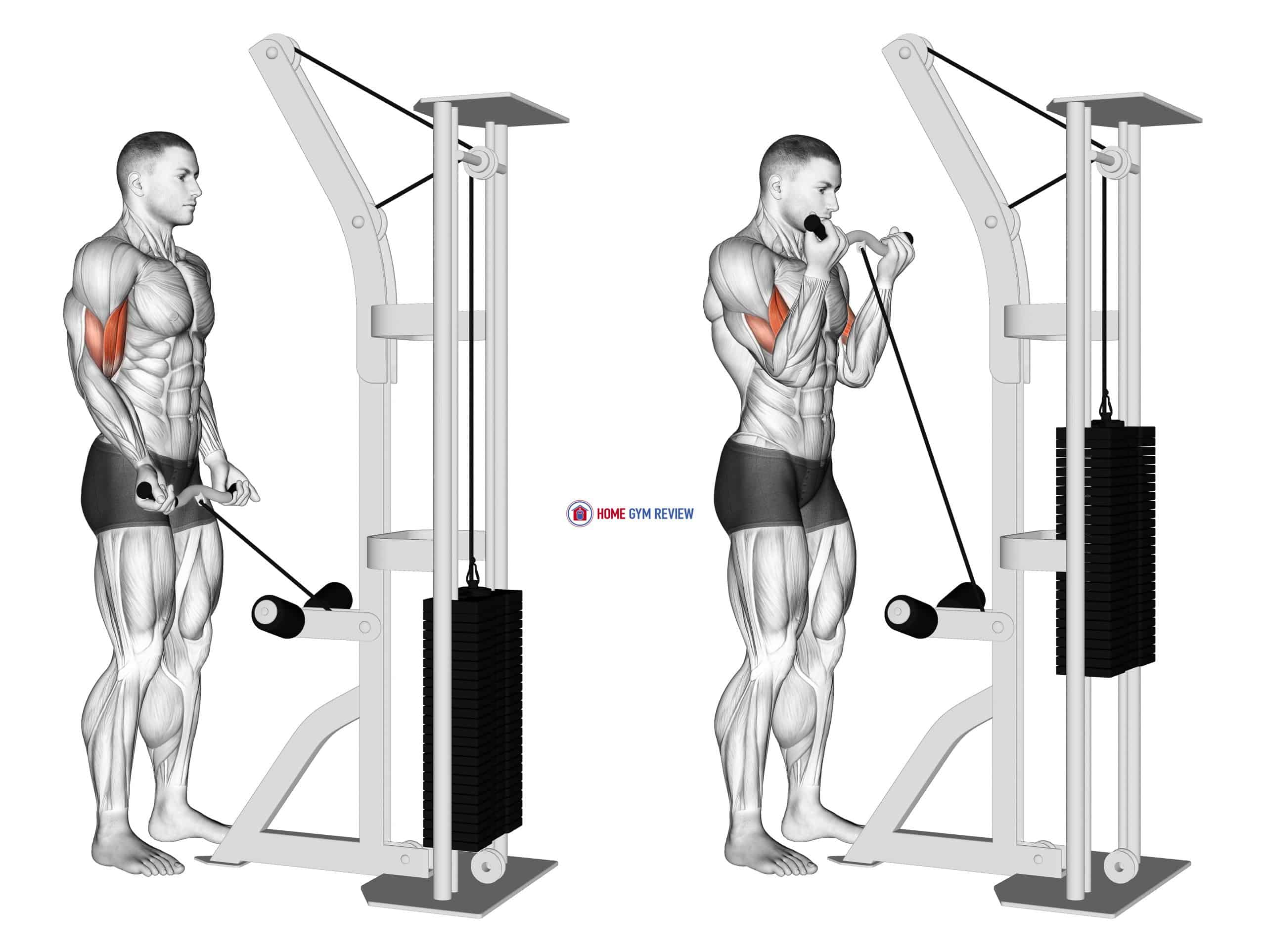 Cable Biceps Curl (SZ-bar)