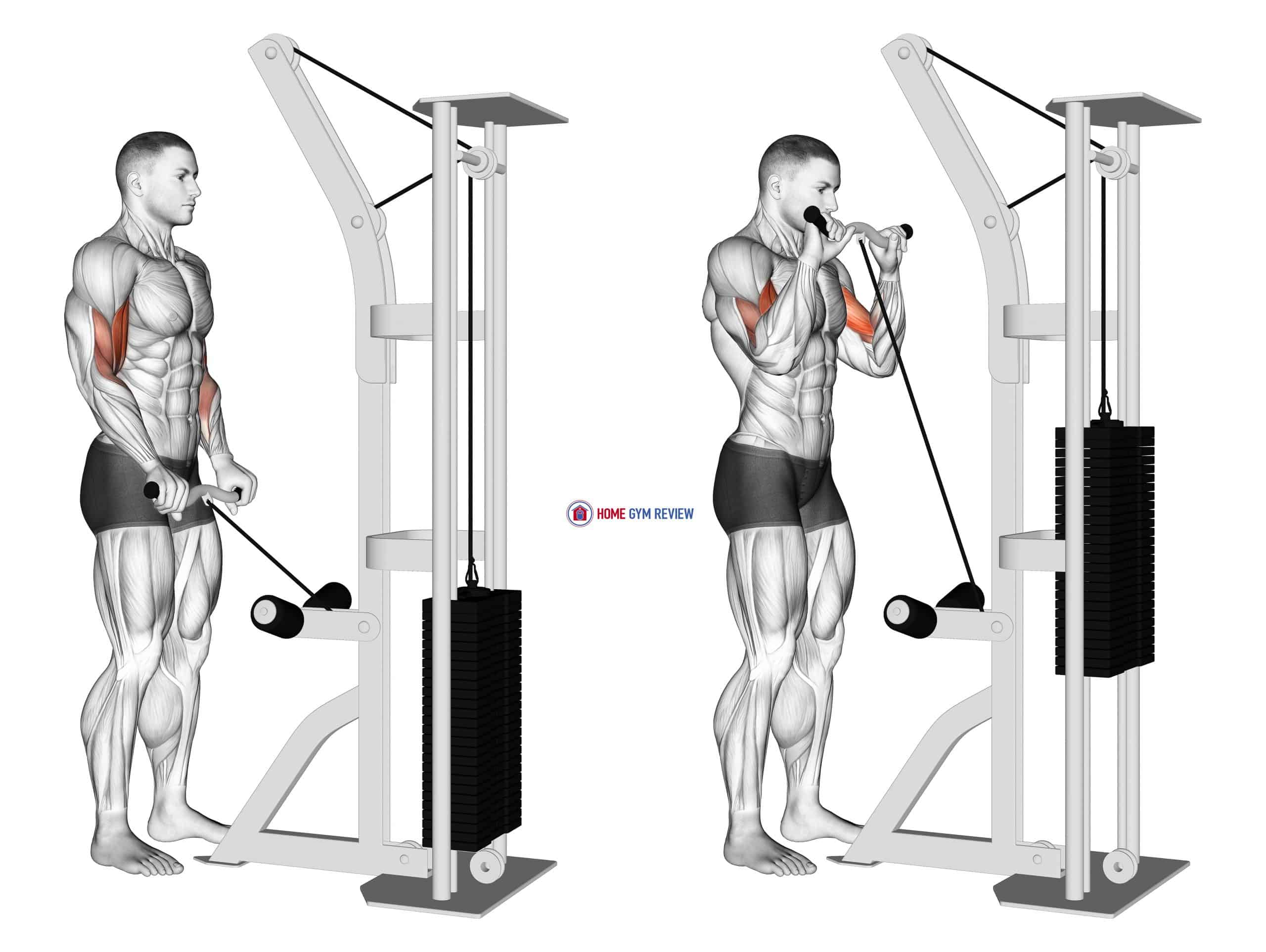Cable Reverse Grip Biceps Curl (SZ-bar)
