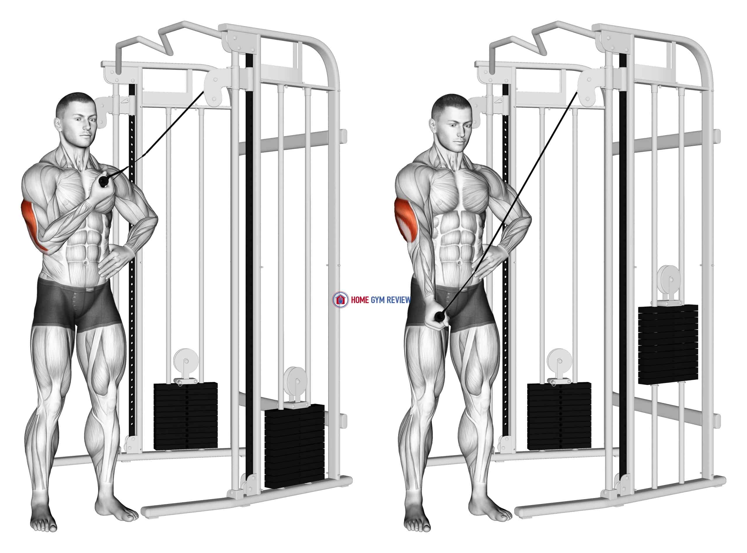 Cable One Arm Side Triceps Pushdown