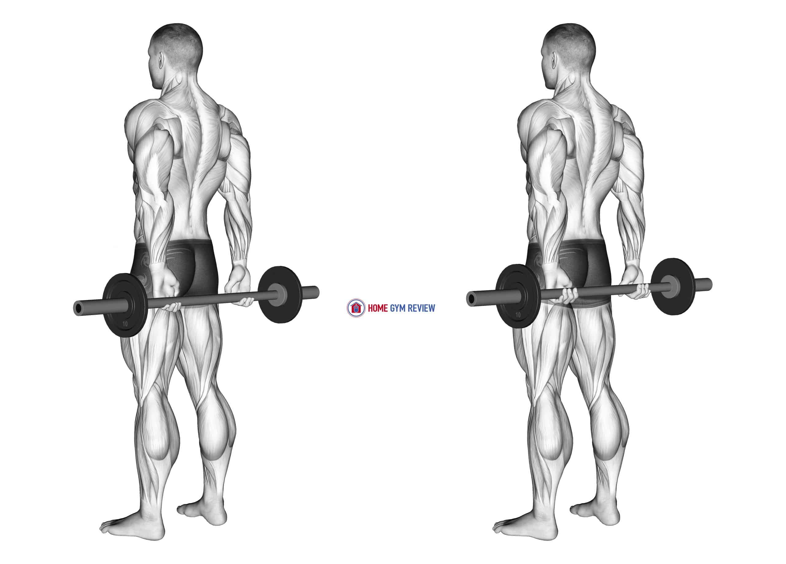 Barbell Behind Back Finger Curl