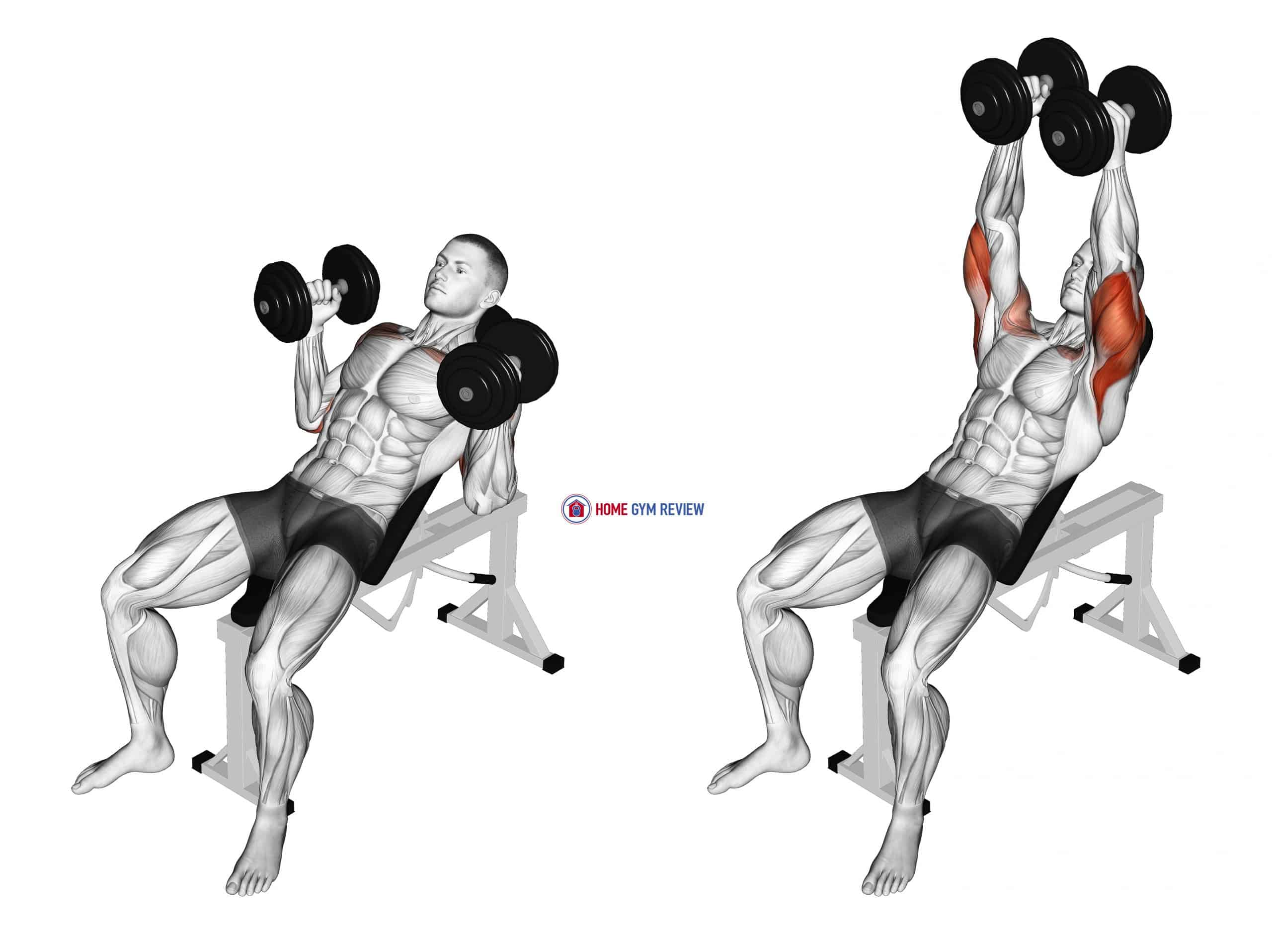 Dumbbell Palms In Incline Bench Press