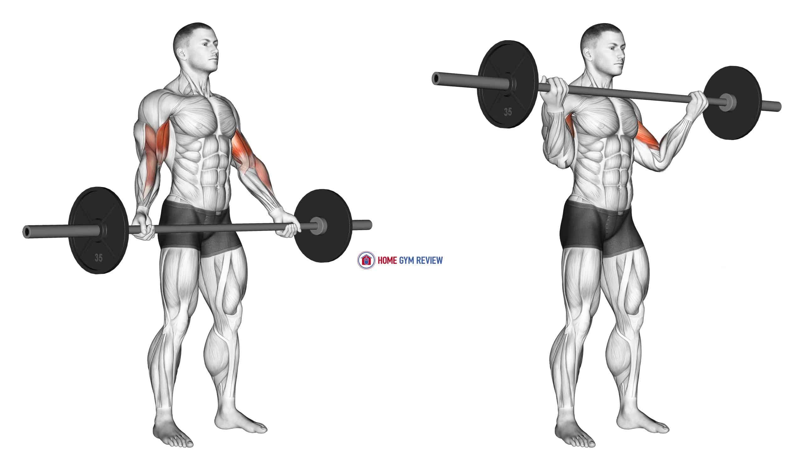 Barbell Standing Wide Grip Biceps Curl
