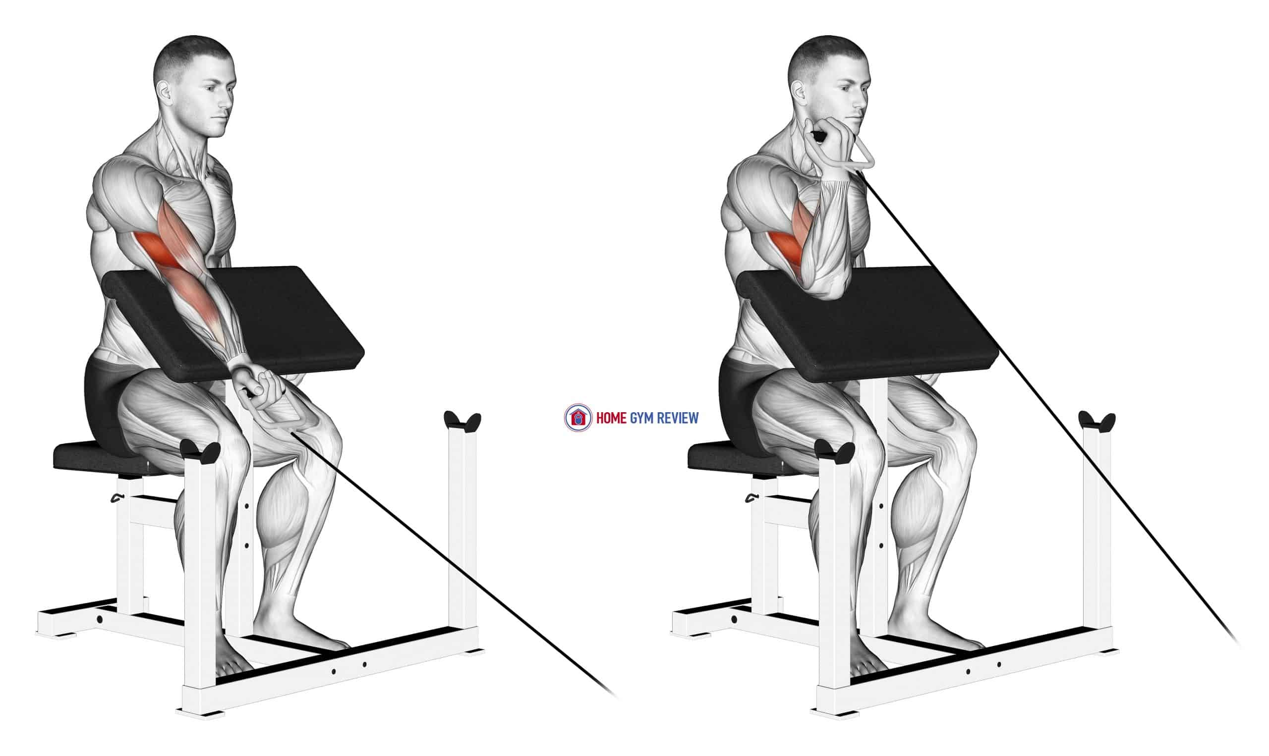 Cable One Arm Preacher Curl
