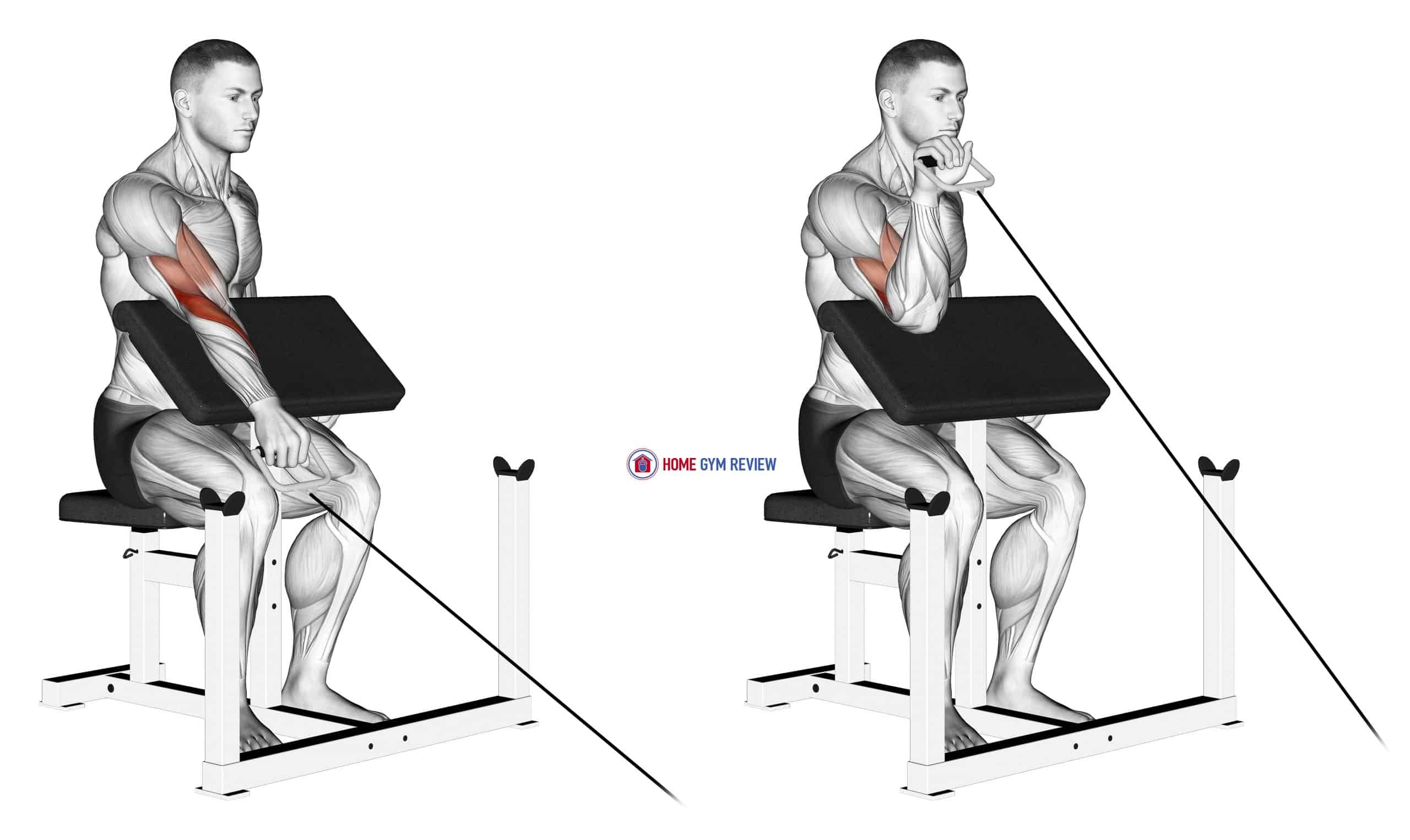 Cable One Arm Reverse Preacher Curl