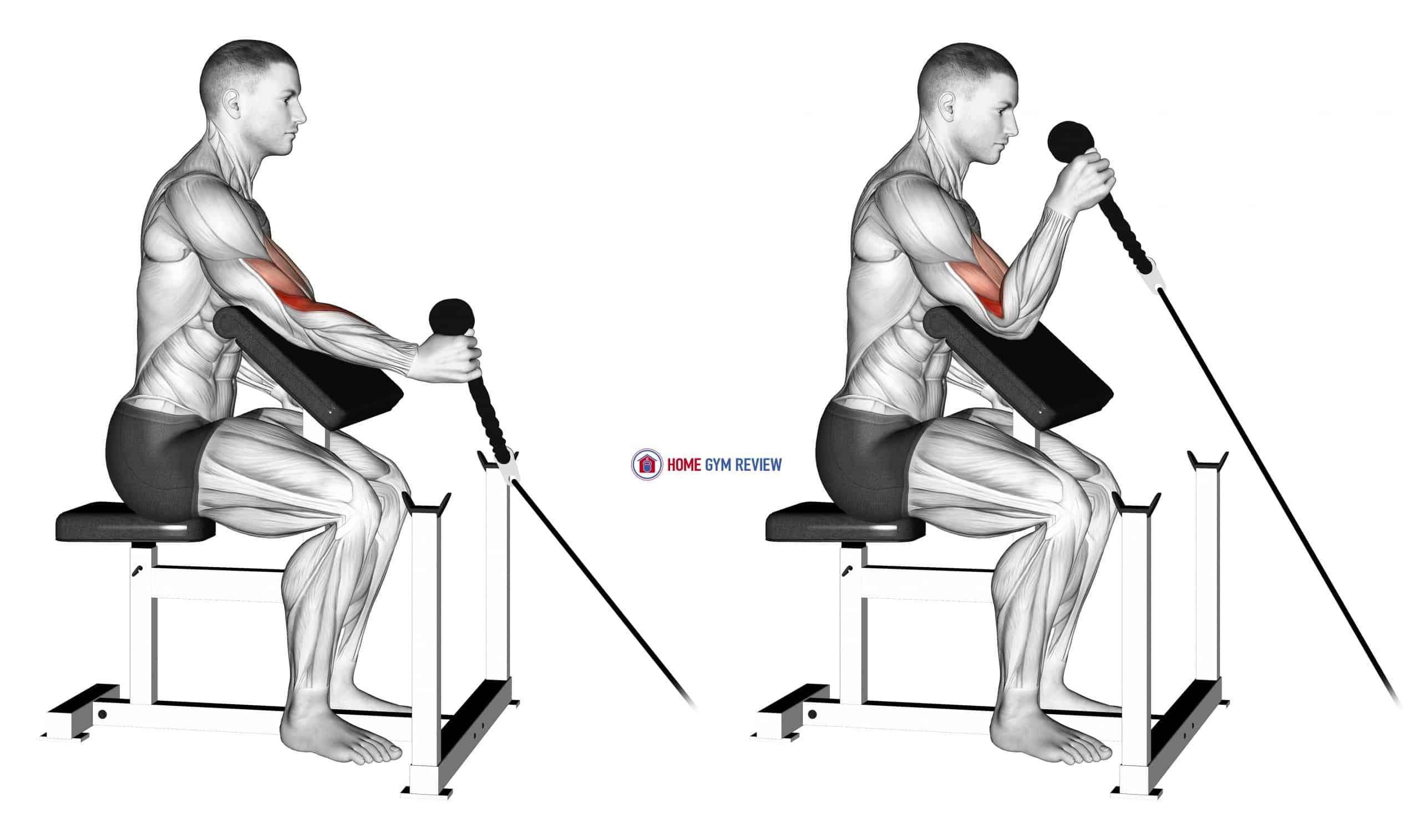 Cable Rope One Arm Hammer Preacher Curl