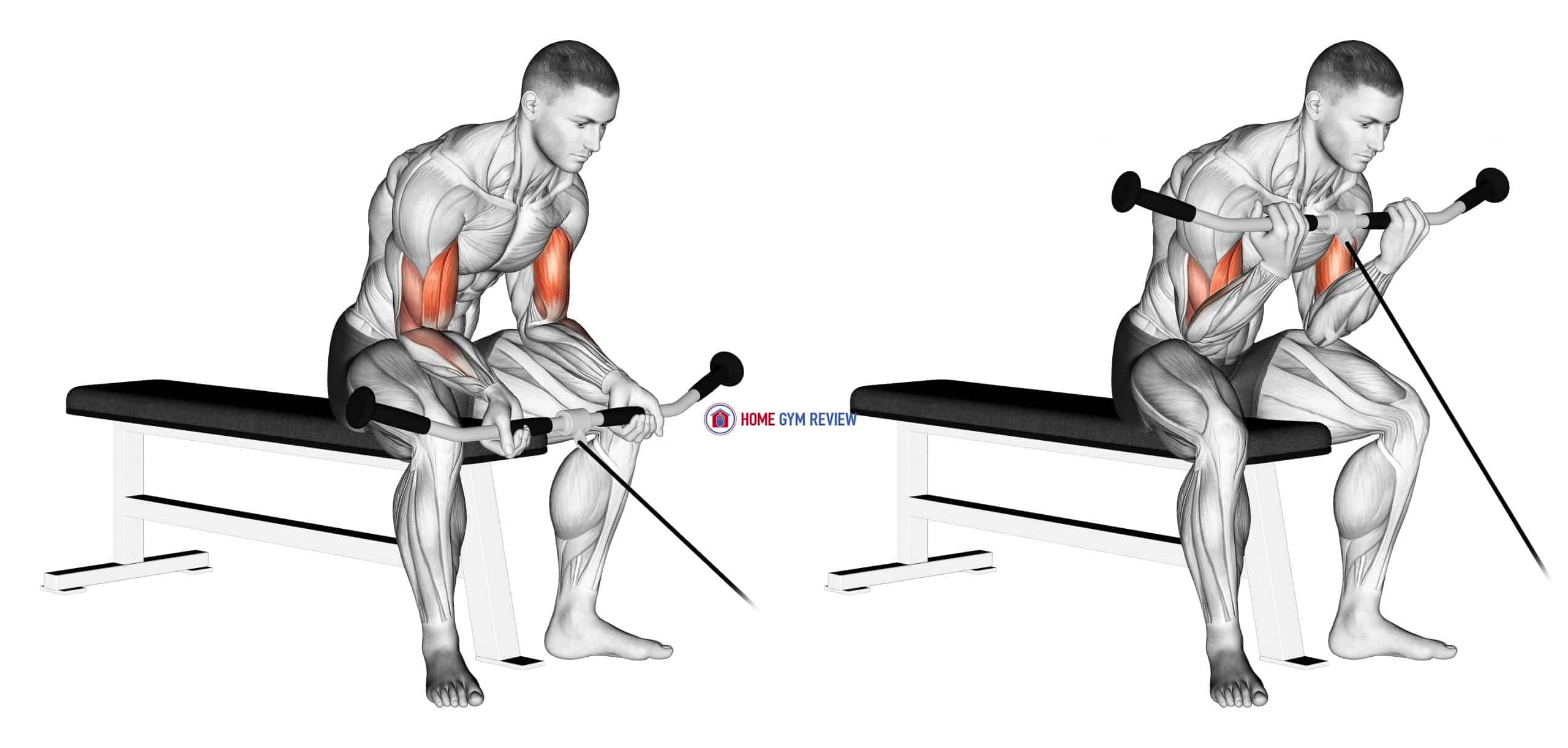 Cable Seated Curl