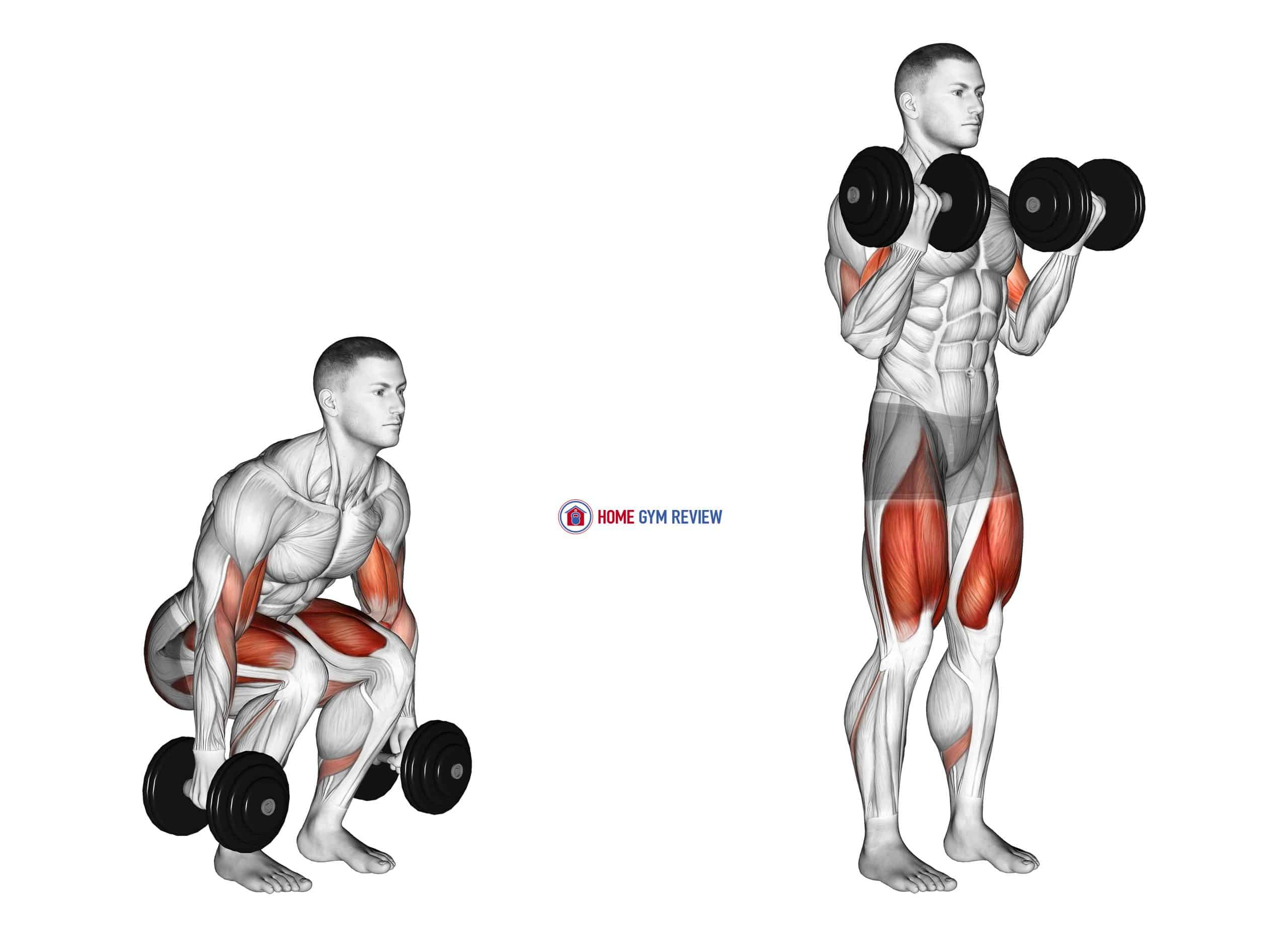 Dumbbell Biceps Curl Squat