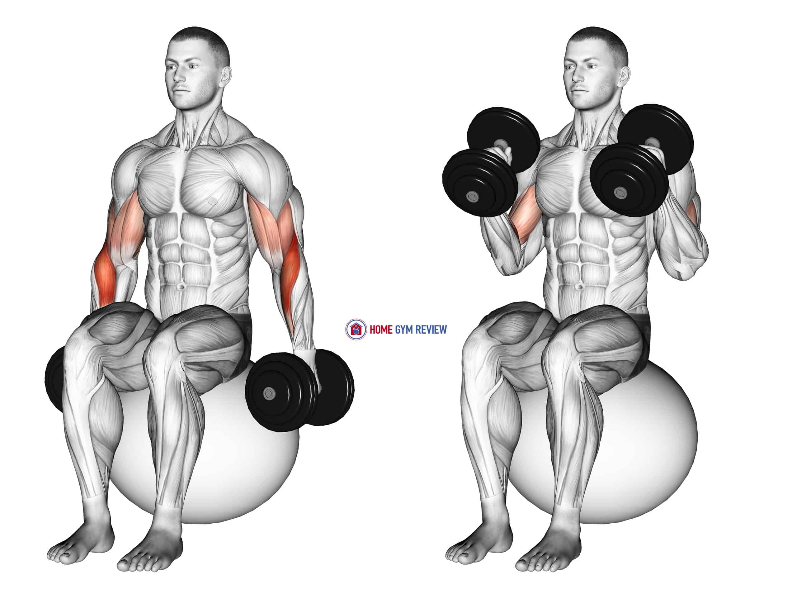 Dumbbell Hammer Curl on Exercise Ball