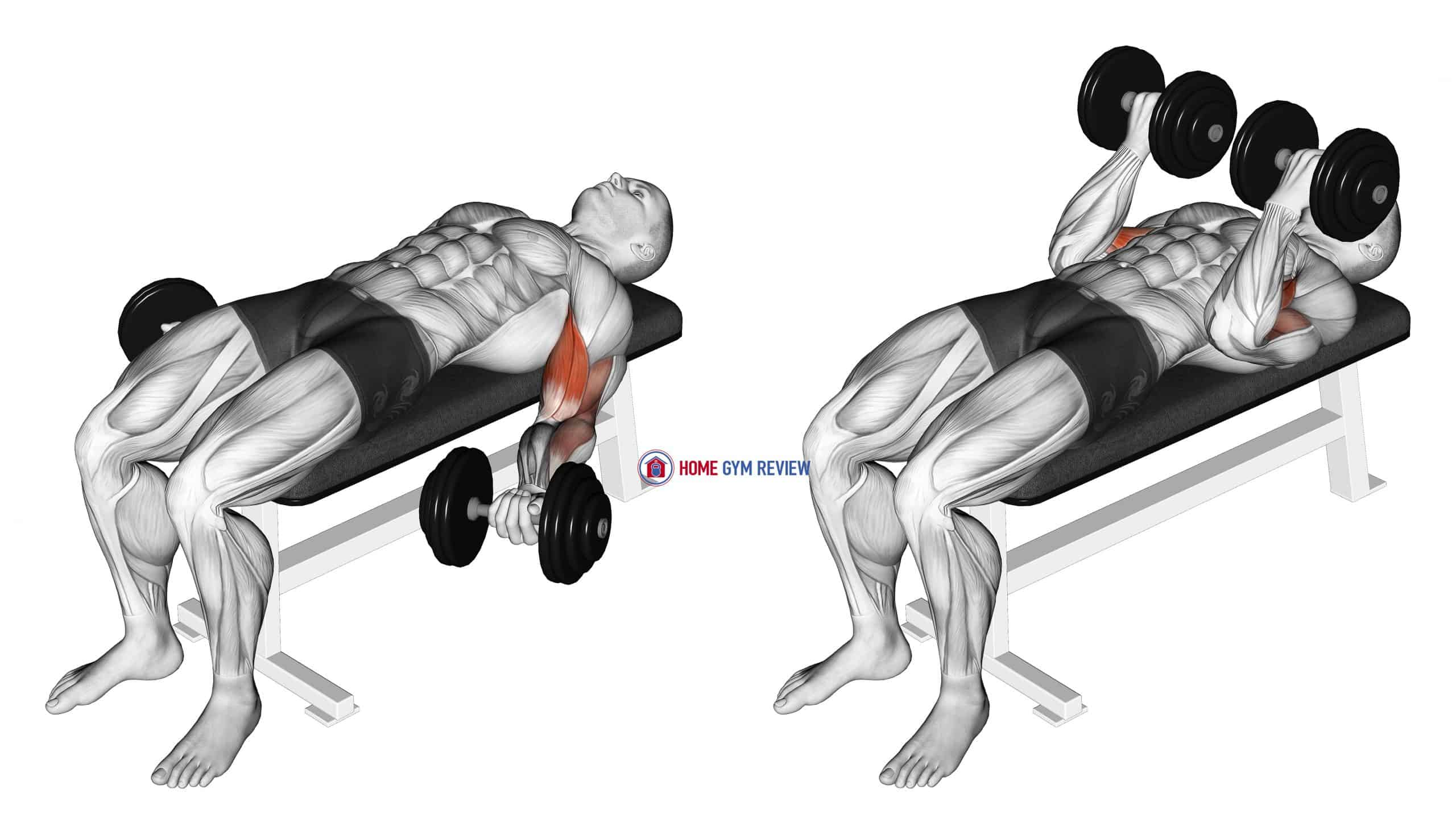 Dumbbell Lying Supine Biceps Curl
