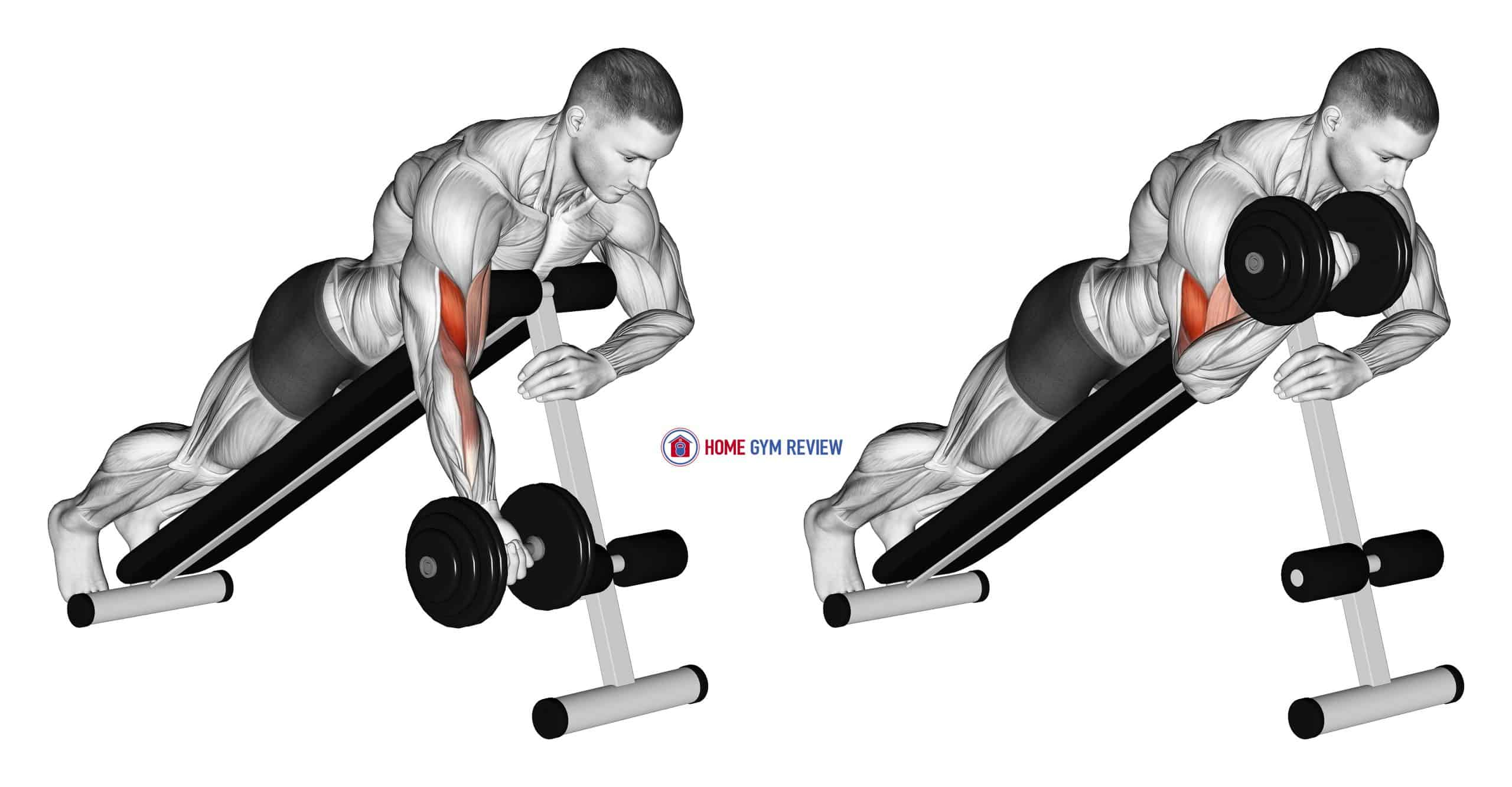 Dumbbell One Arm Prone Curl