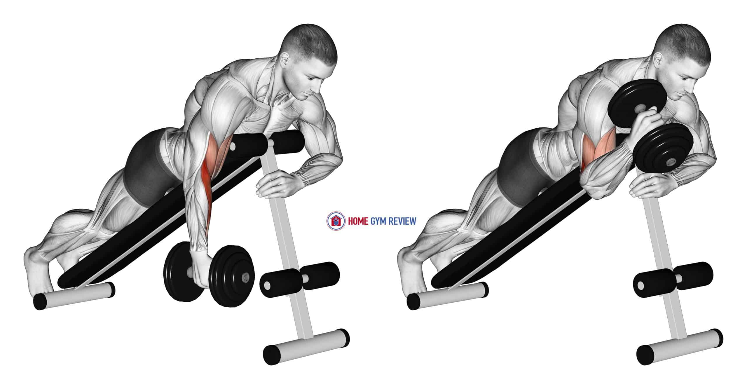 Dumbbell One Arm Prone Hammer Curl