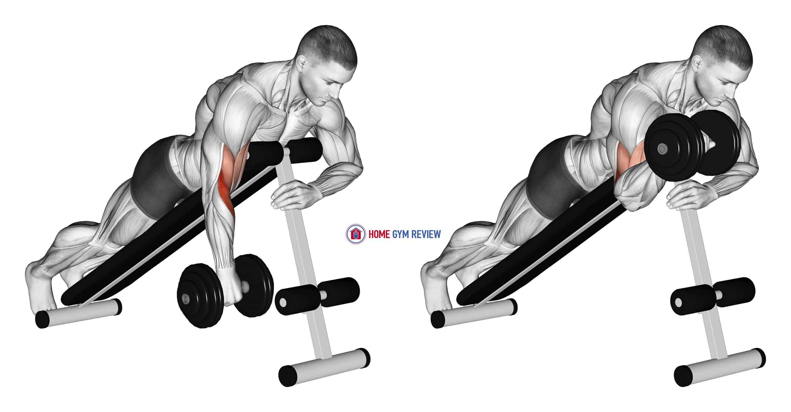 Dumbbell One Arm Reverse Spider Curl
