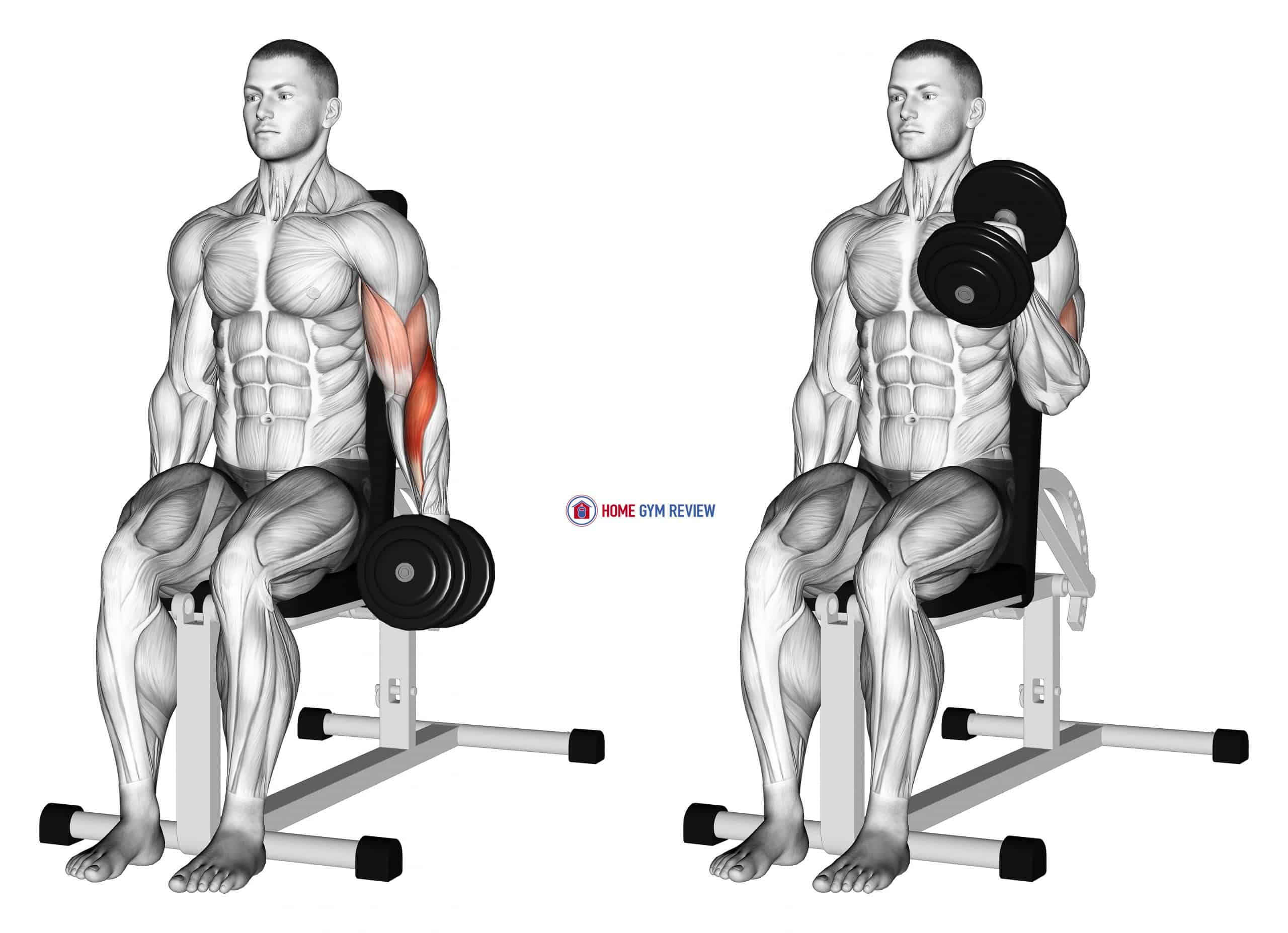 Dumbbell One Arm Seated Hammer Curl