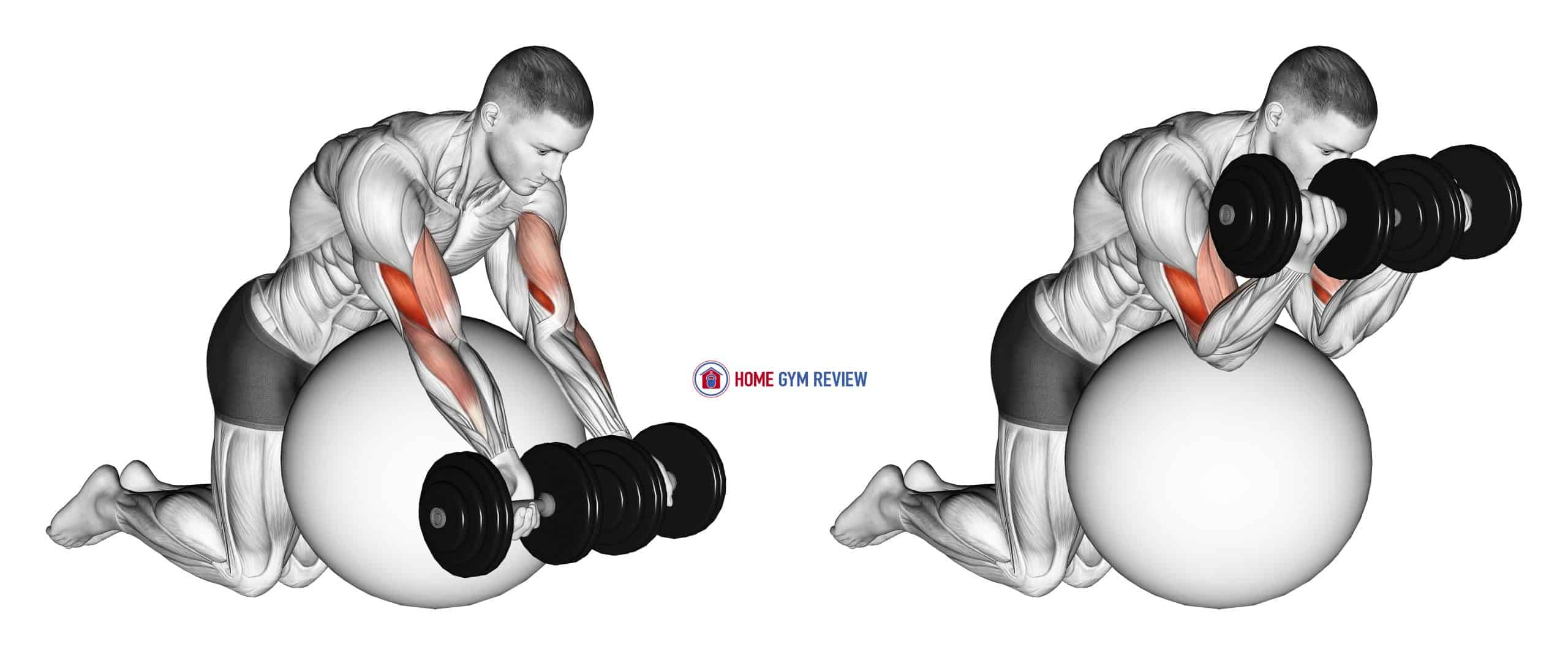 Dumbbell Preacher Curl over Exercise Ball