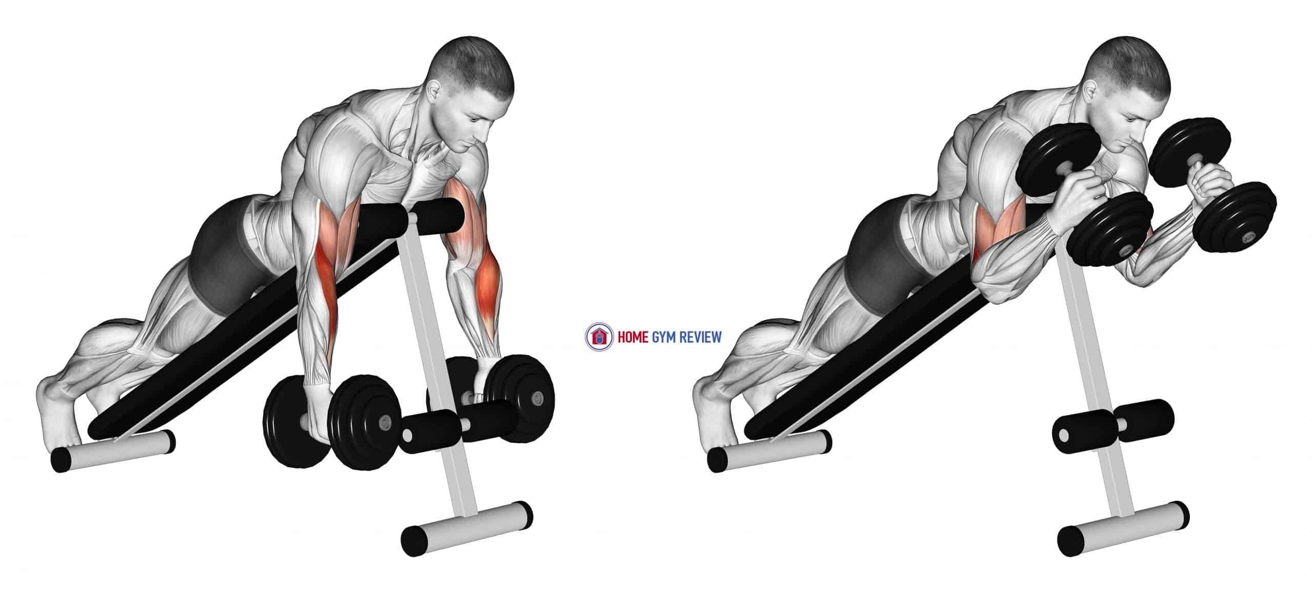 Dumbbell Prone Incline Hammer Curl