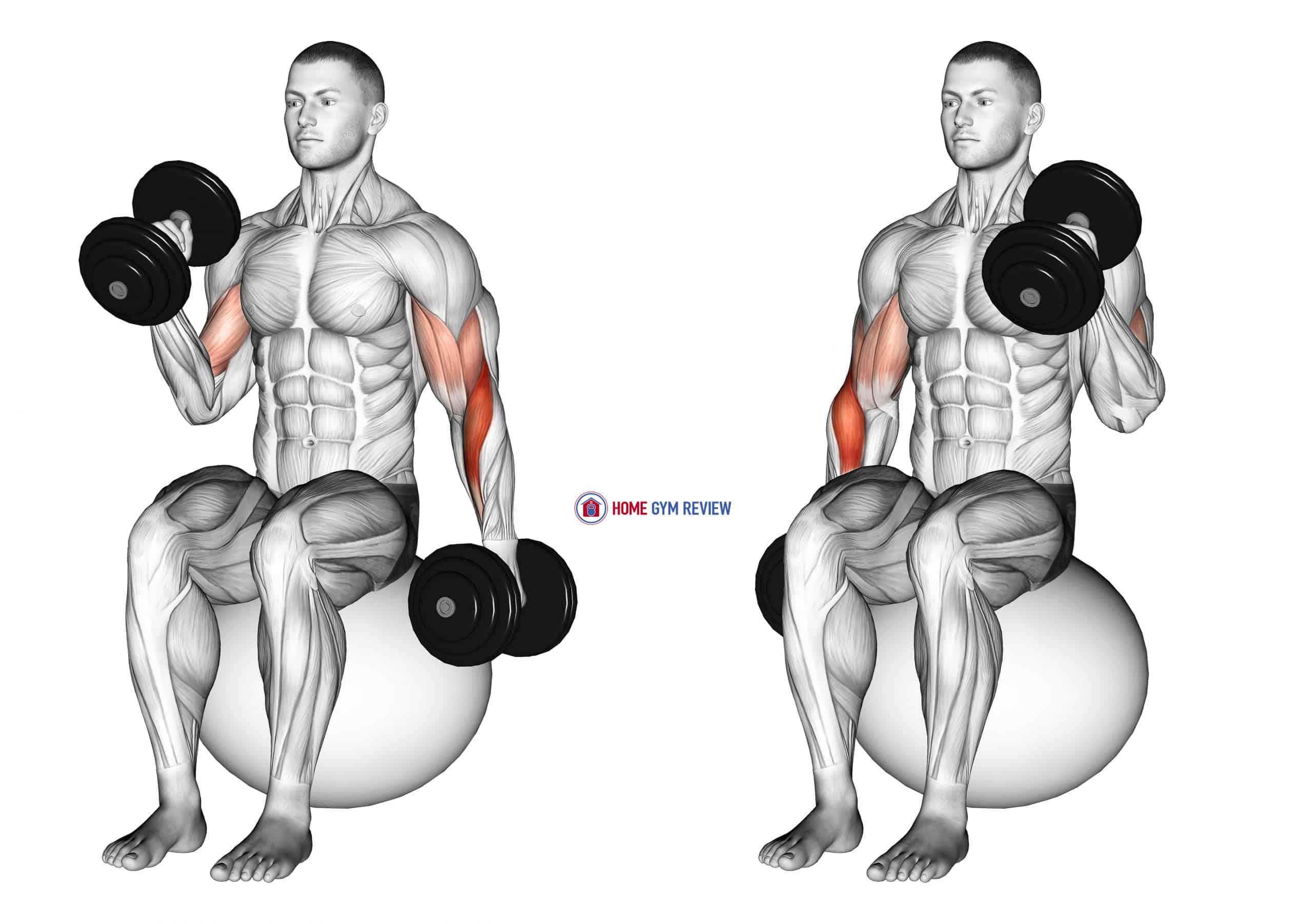 Dumbbell Seated Alternate Hammer Curl on Exercise Ball