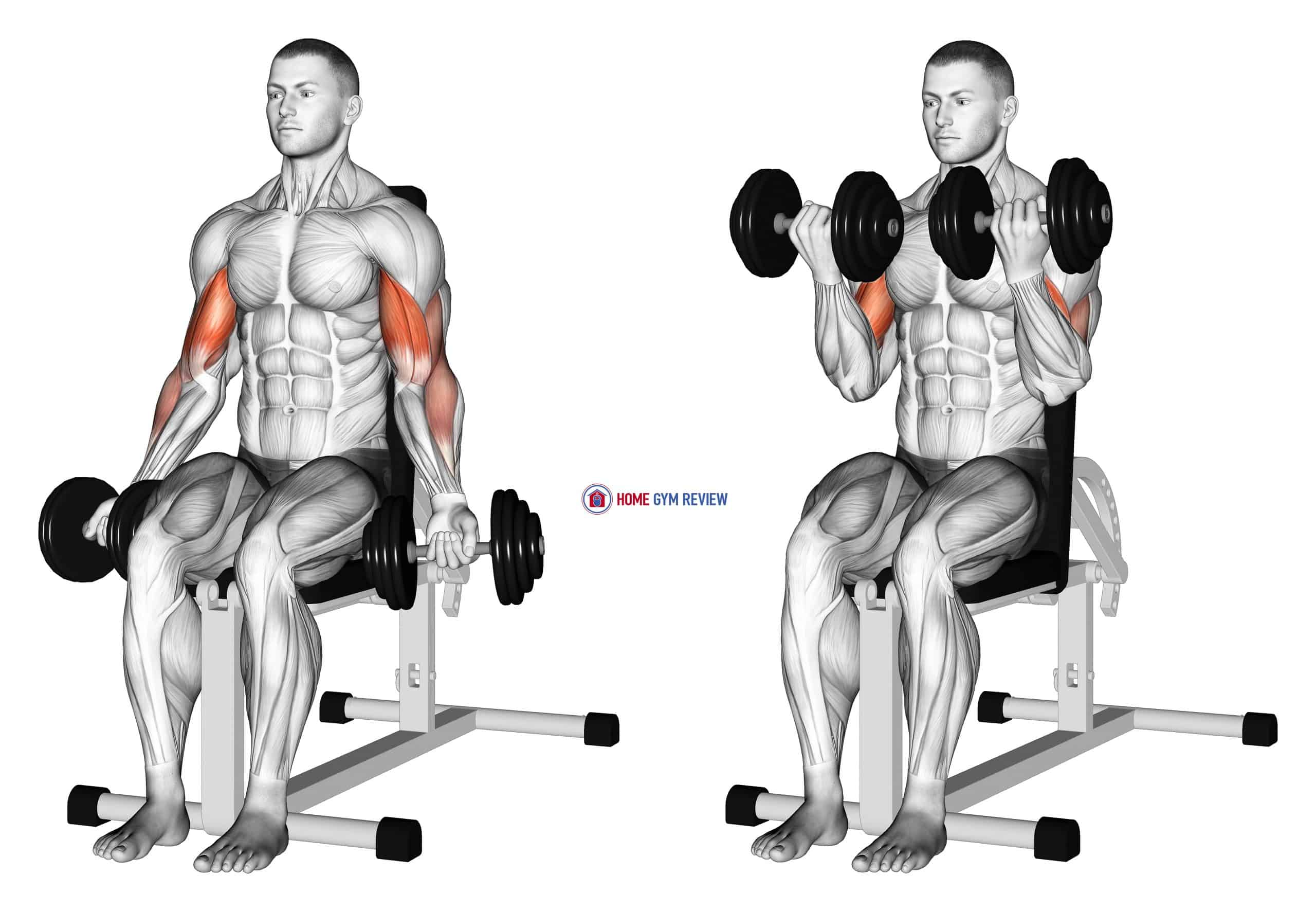 Dumbbell Seated Bicep Curl