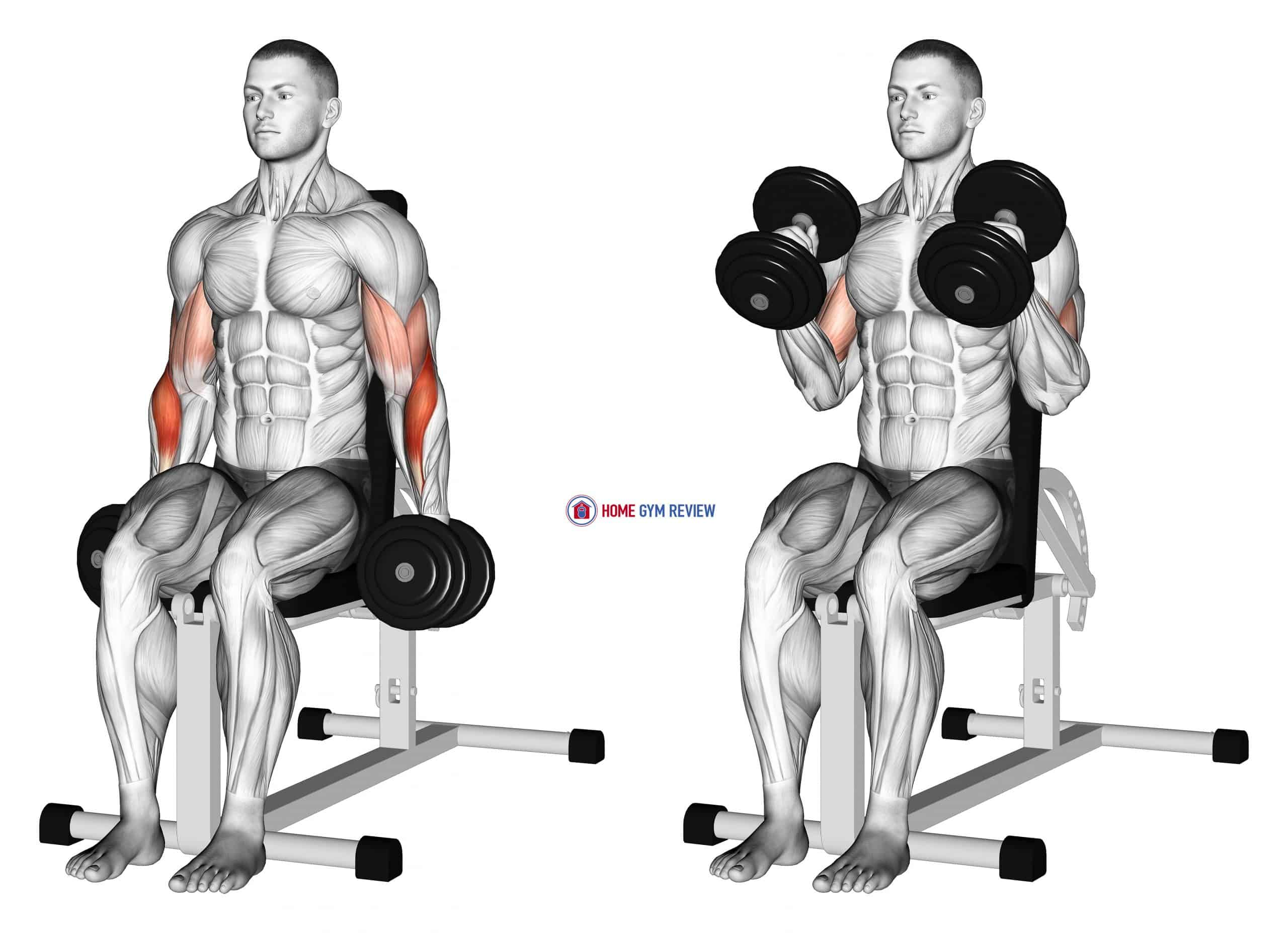 Dumbbell Seated Hammer Curl