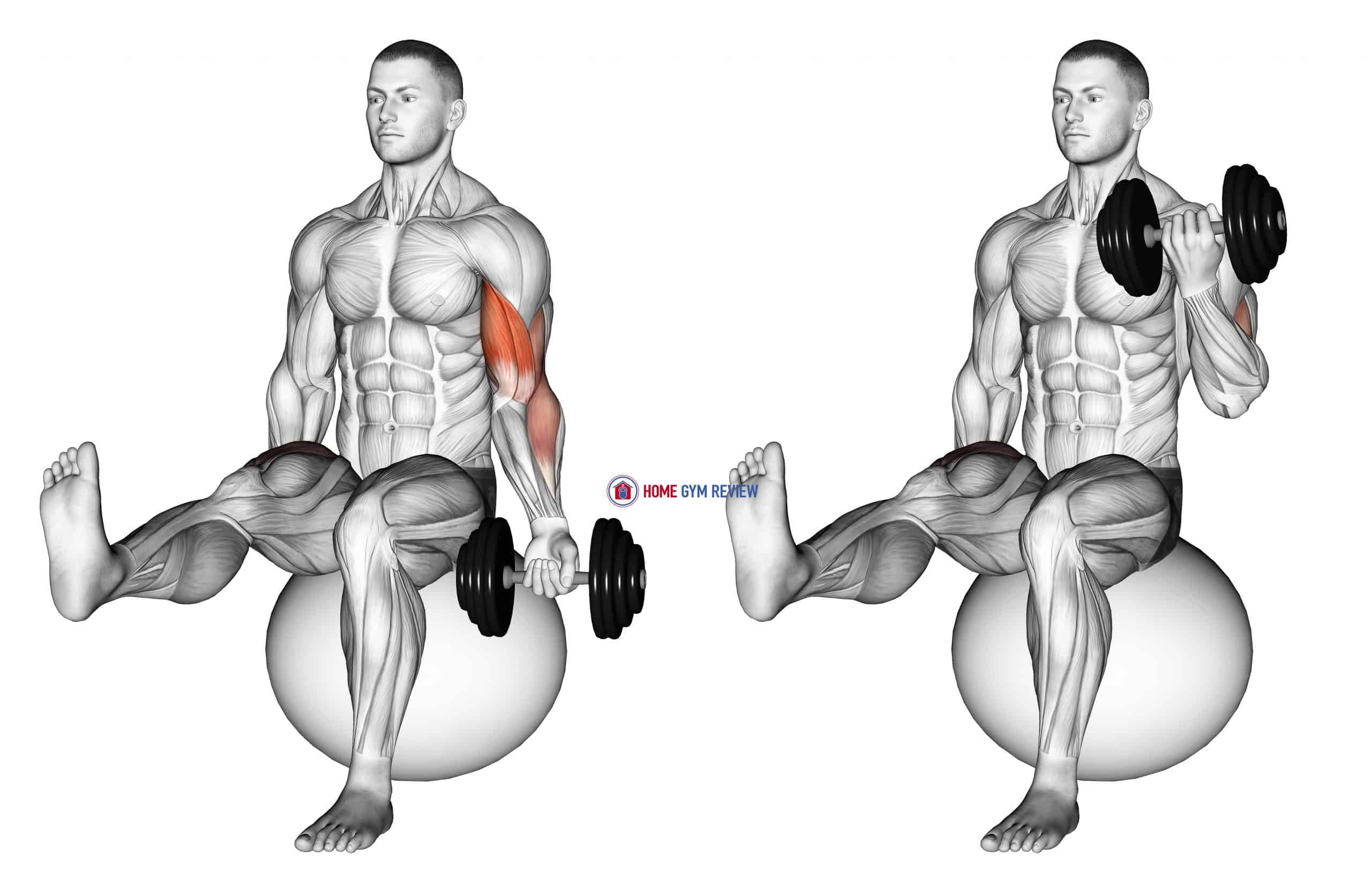 Dumbbell Seated One Arm Bicep Curl on Exercise Ball with Leg Raised