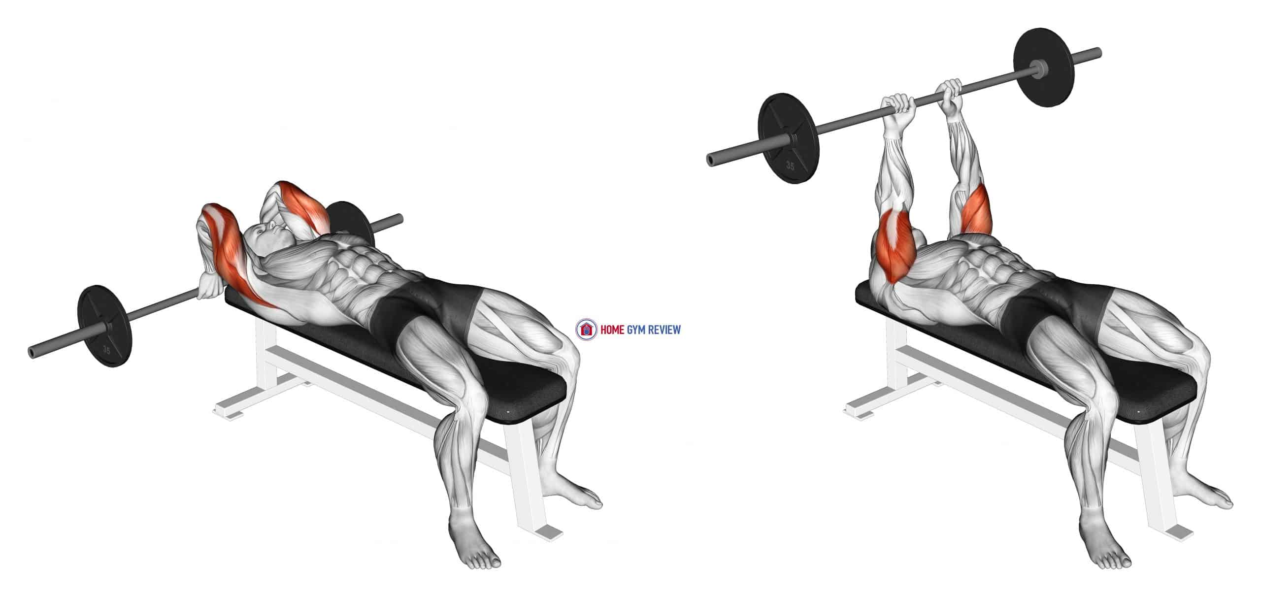 Barbell Lying Back of the Head Tricep Extension