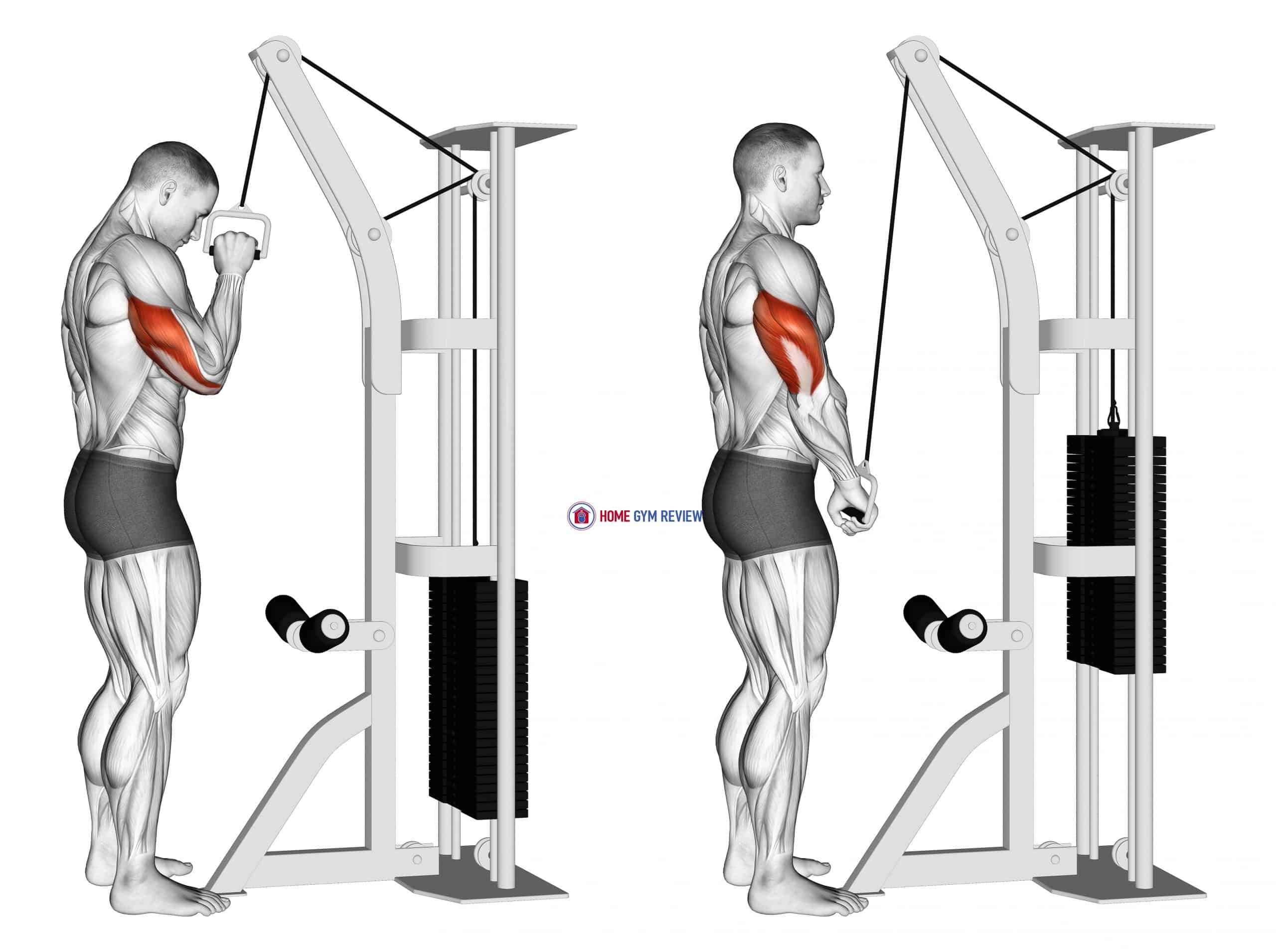 Cable One Arm Tricep Pushdown