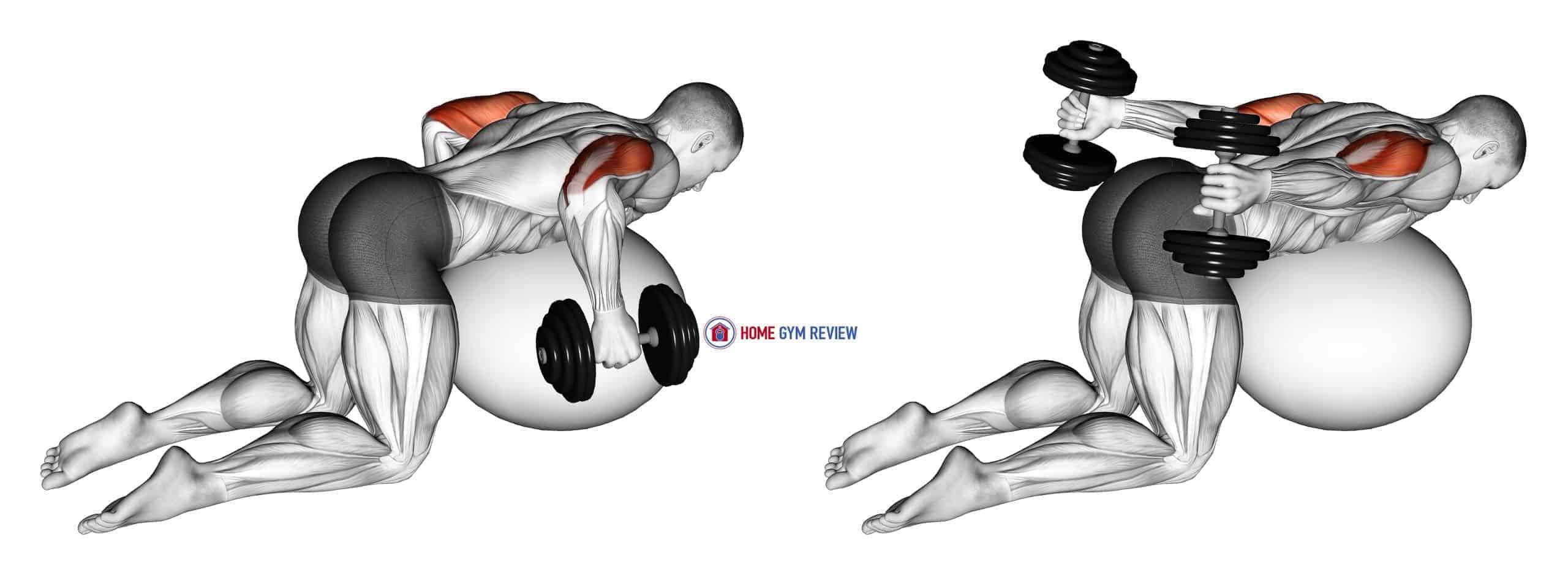 Dumbbell Kickbacks on Exercise Ball