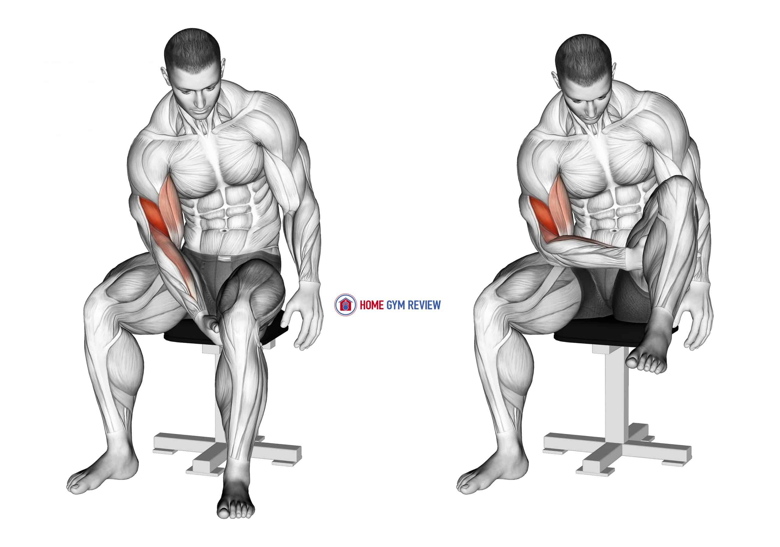 Biceps Leg Concentration Curl