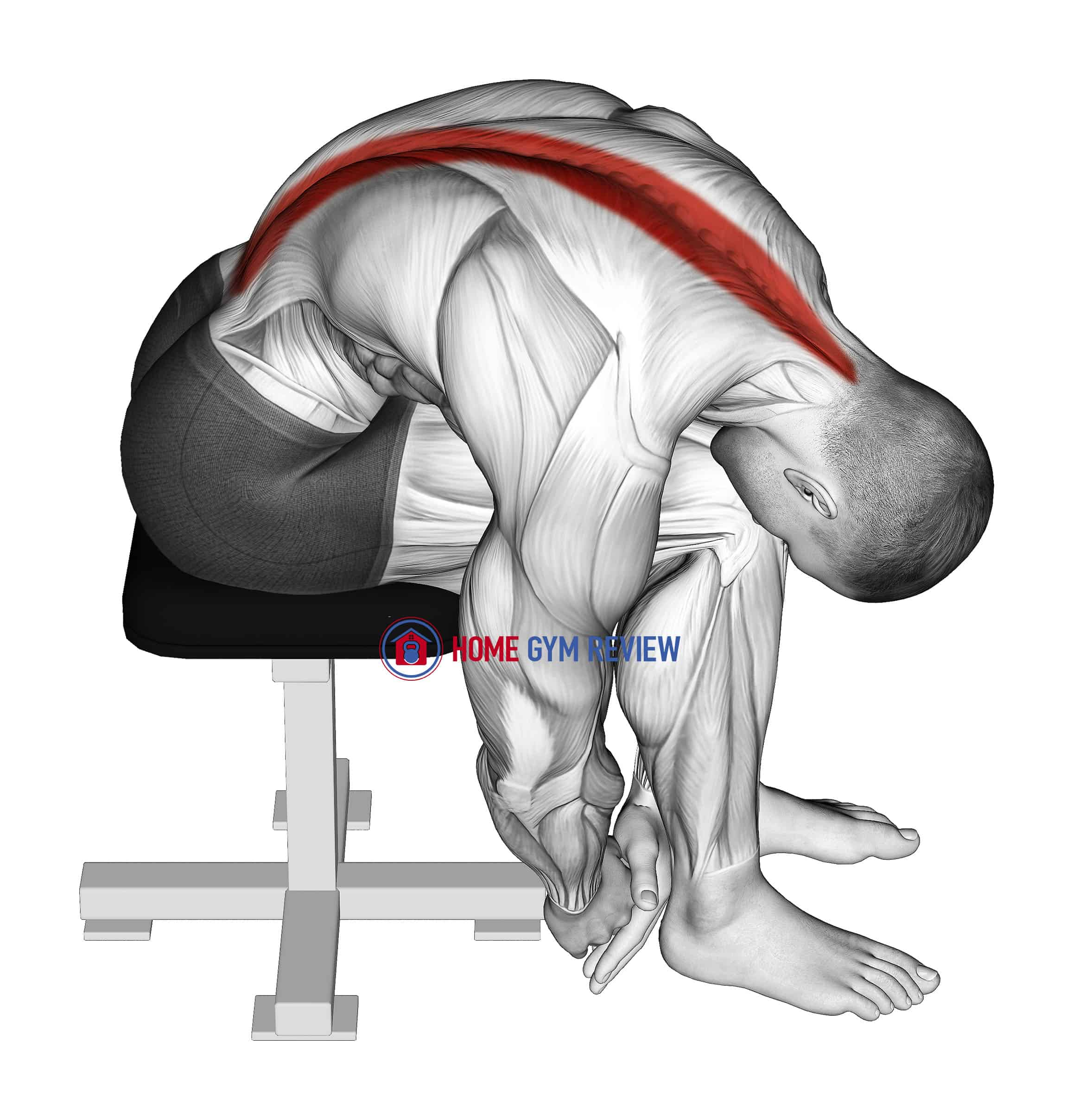 Seated Lower Trunk Extensor Lateral Flexor Stretch