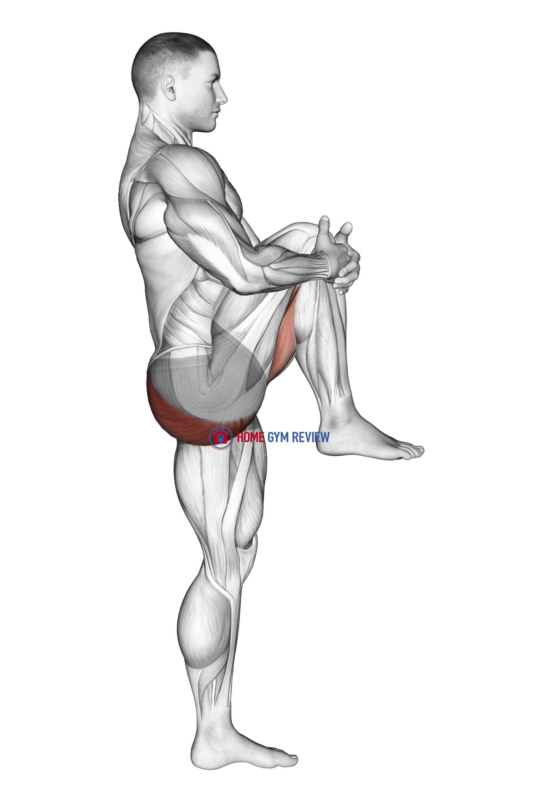 Standing Knee To Chest Stretch