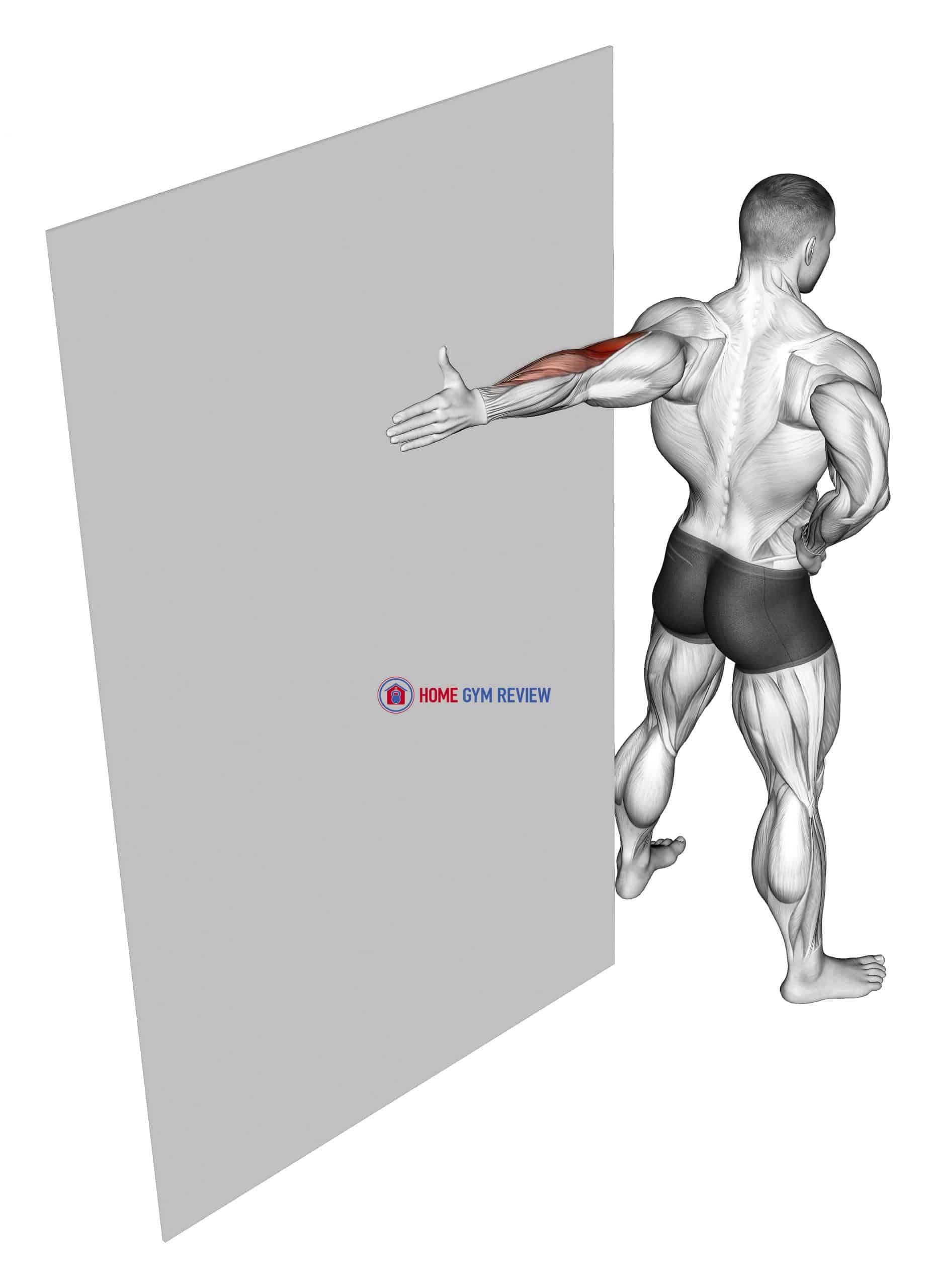 Elbow Flexor Stretch