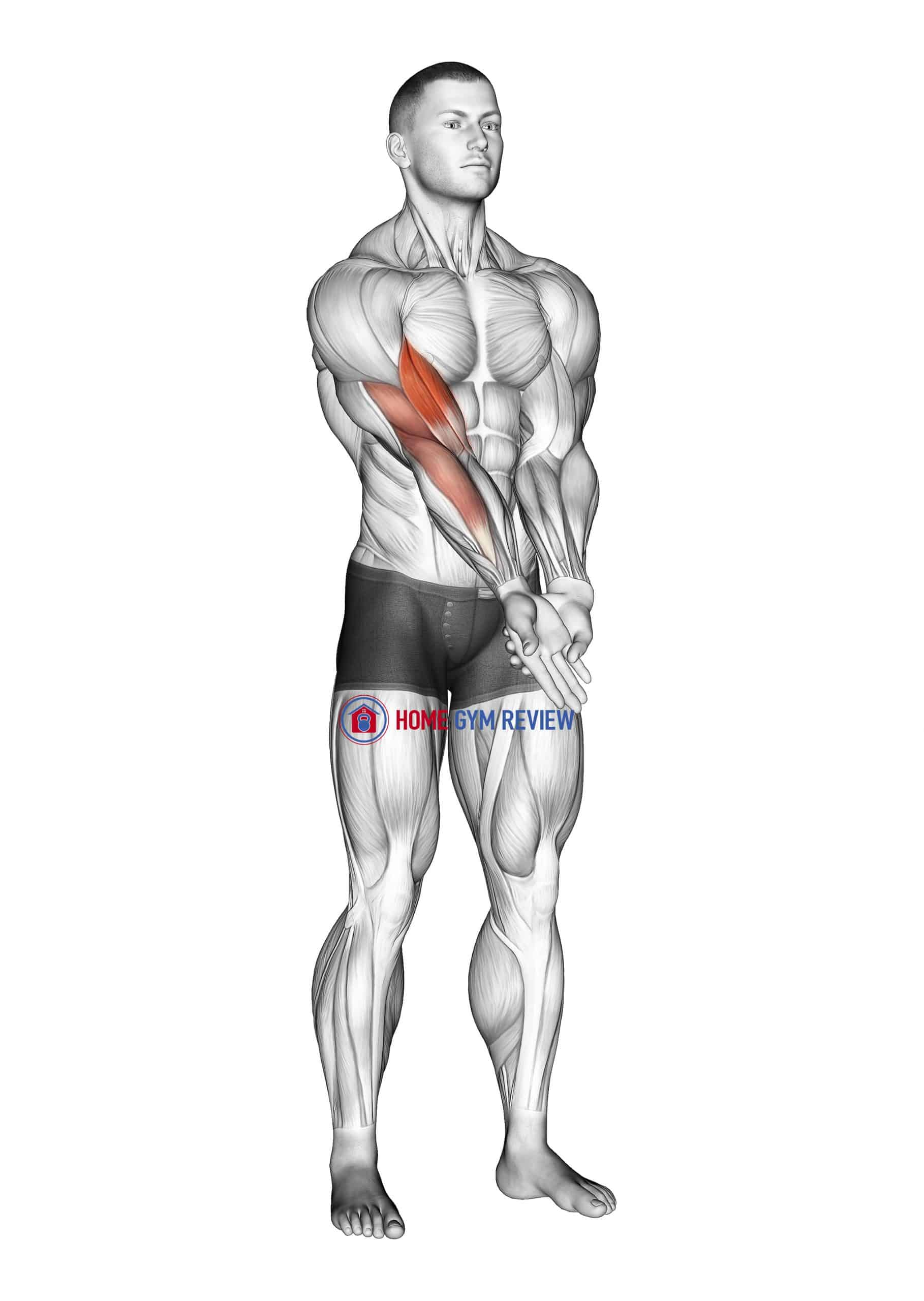 Elbow Extension And Supination - Pronation Forearm Stretch
