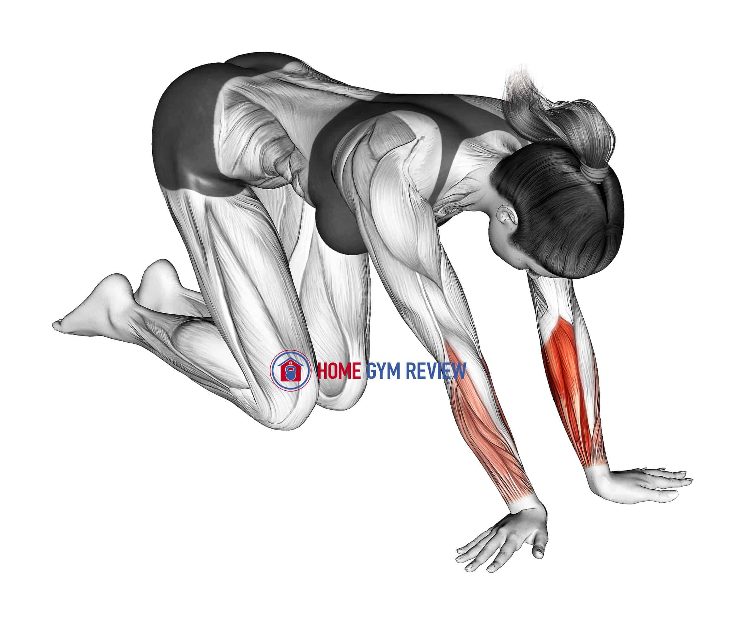 Wrist Radial Deviator And Flexor Stretch