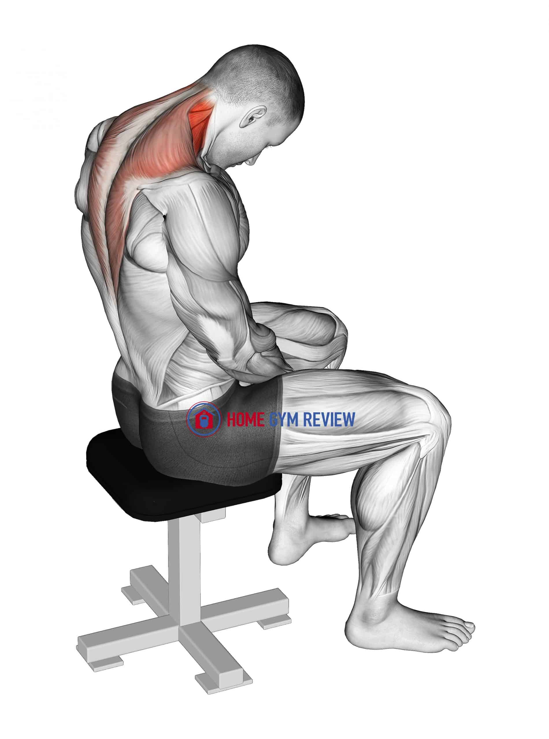 Sitting Neck Flexion Stretch