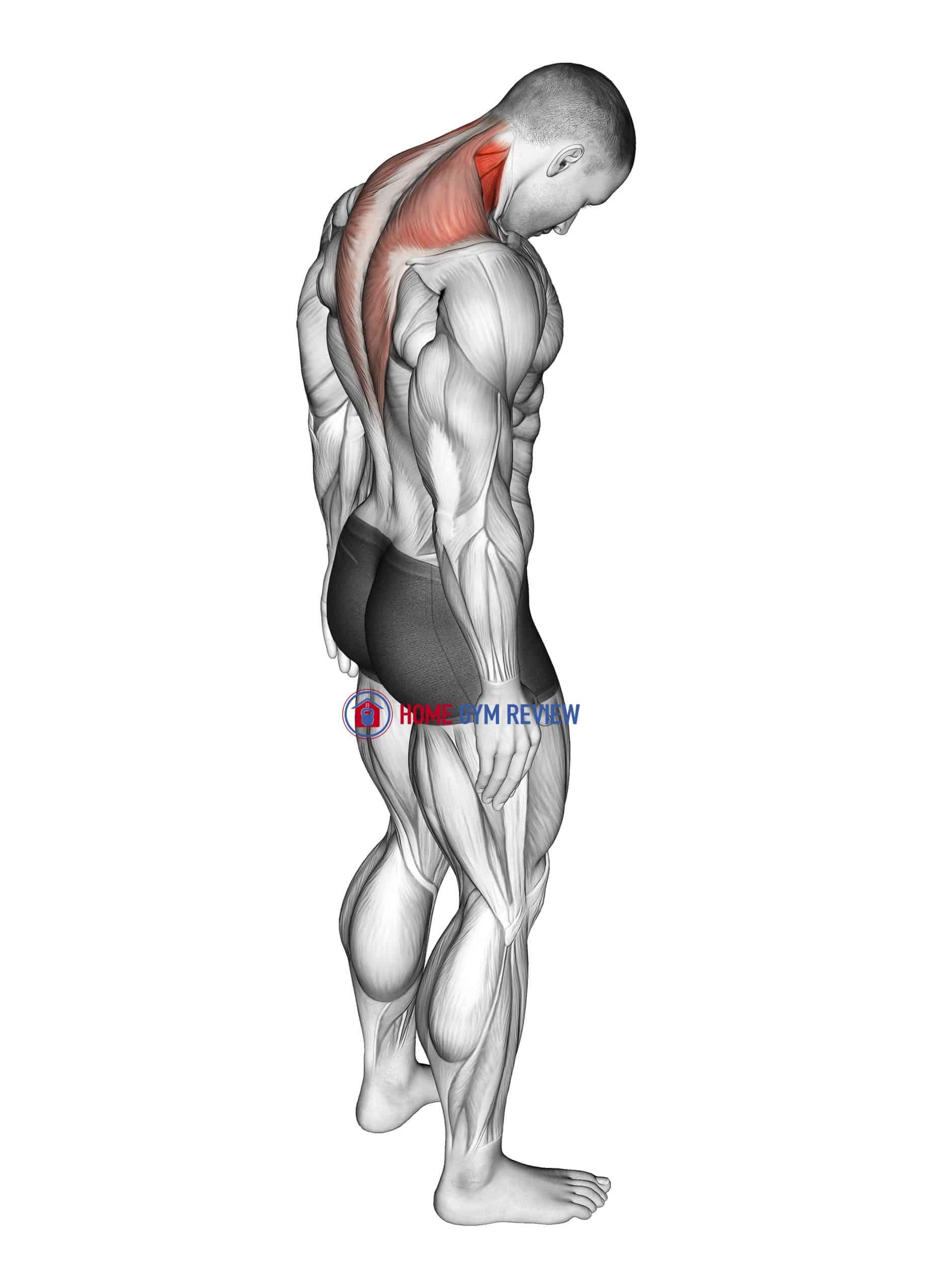 Forward Flexion Neck Stretch