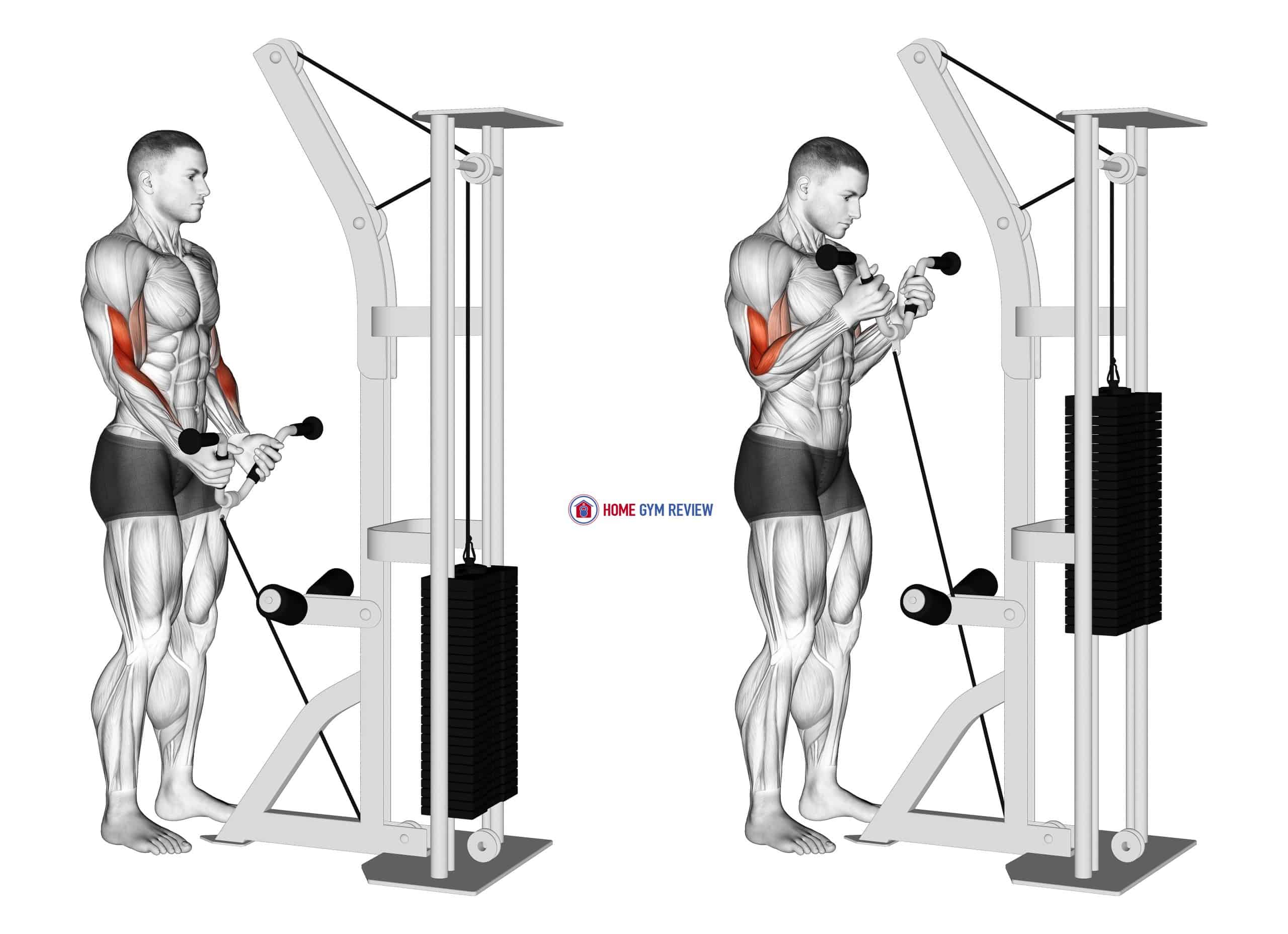 Cable Curl with Multipurpose V bar