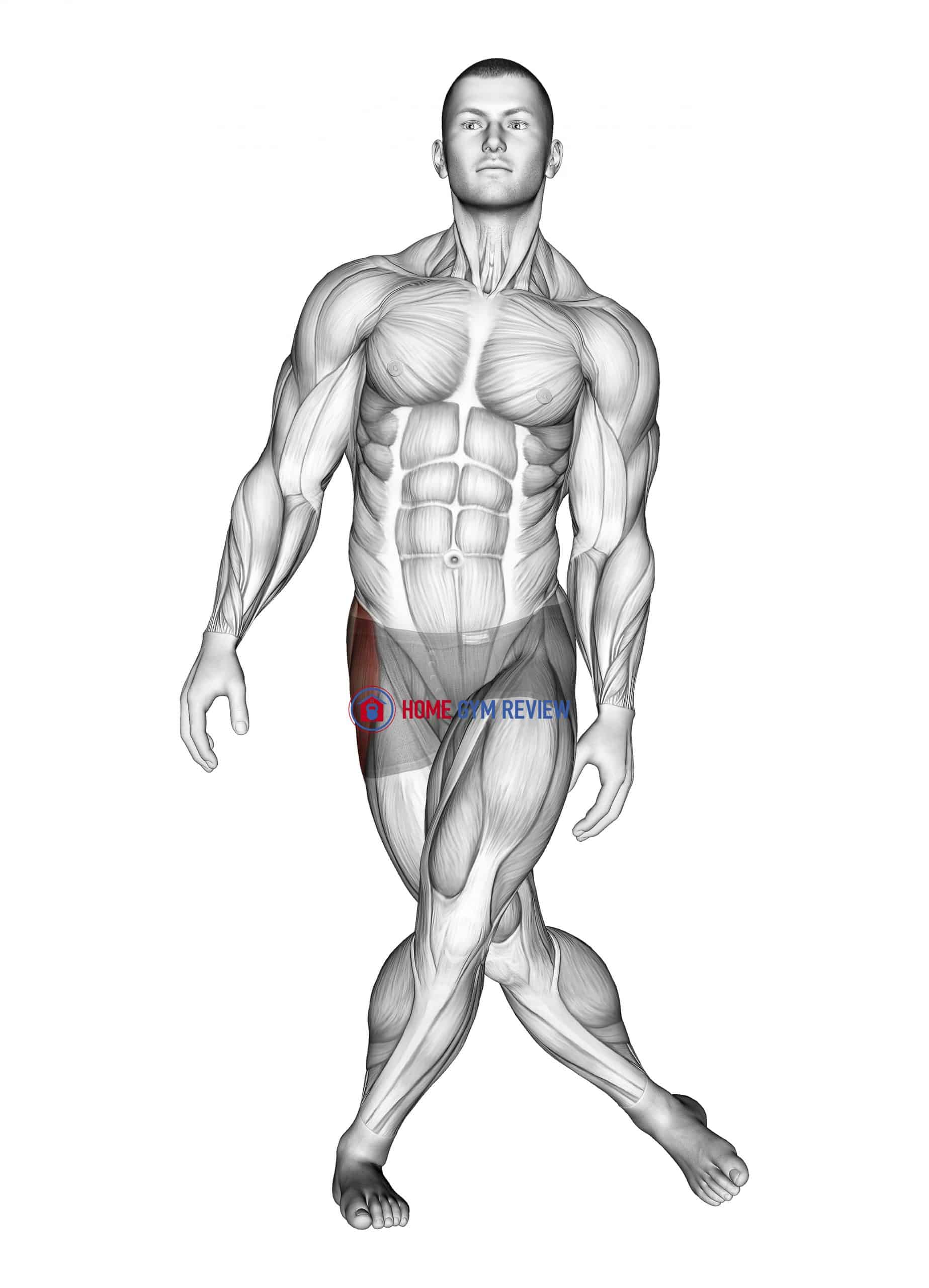 Standing Leg Cross Abductor Stretch