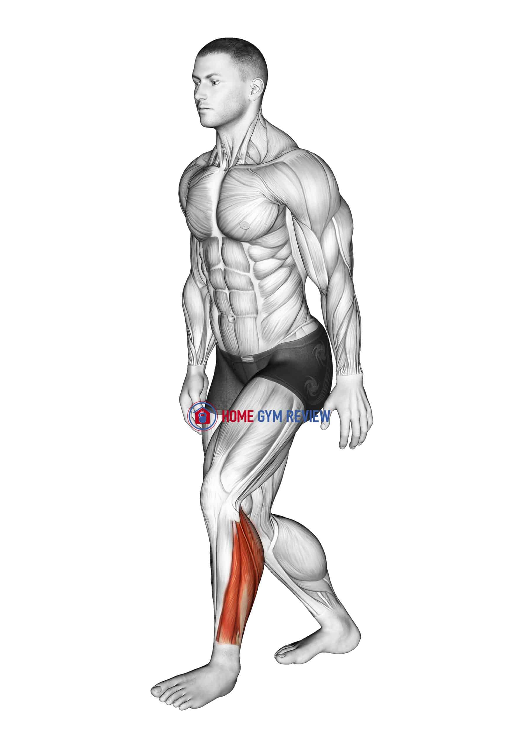Standing Heel Back Achilles Stretch