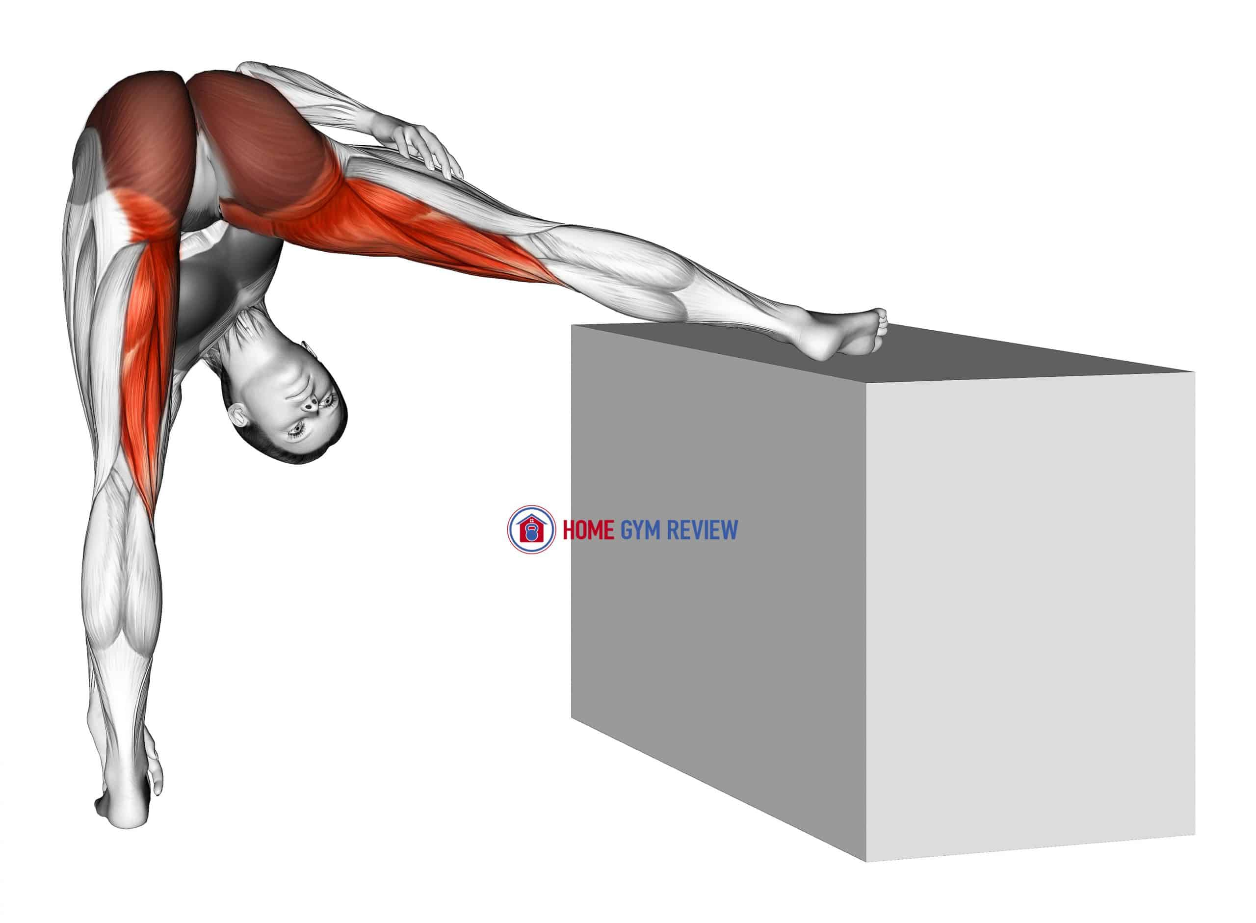 Standing Raised Leg Hip Adductor Stretch
