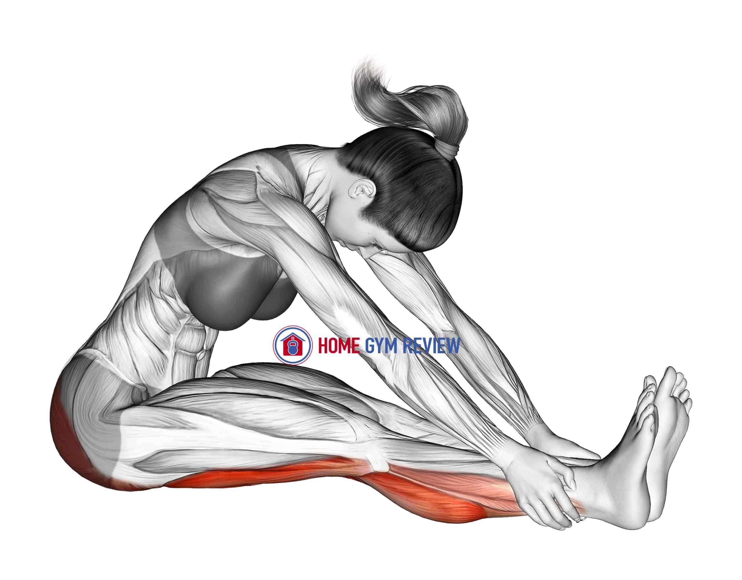 Seated Knee Flexor Stretch