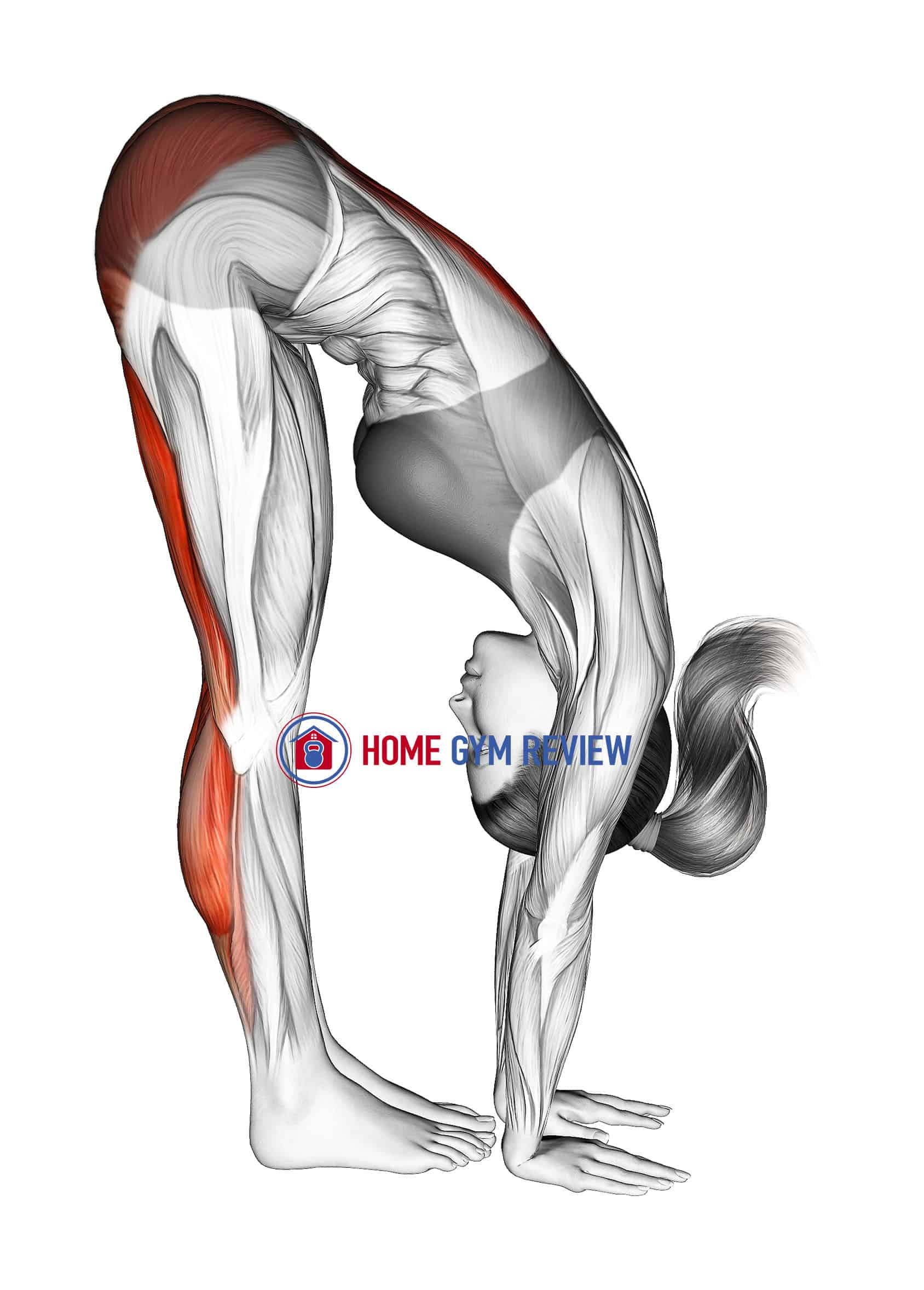 Standing Reach Down Hamstring Stretch